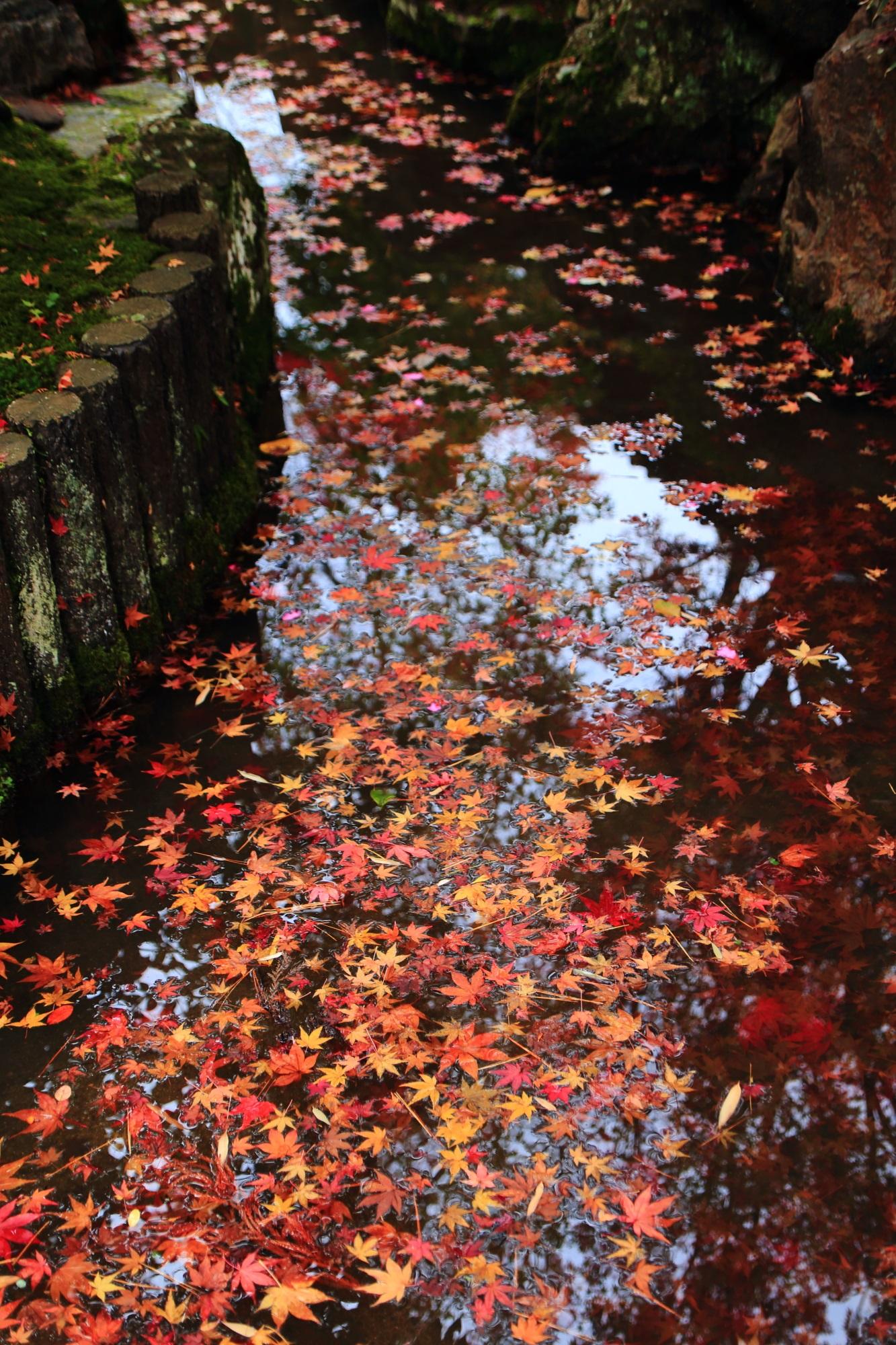 天授庵の華やかな散り紅葉の流れ
