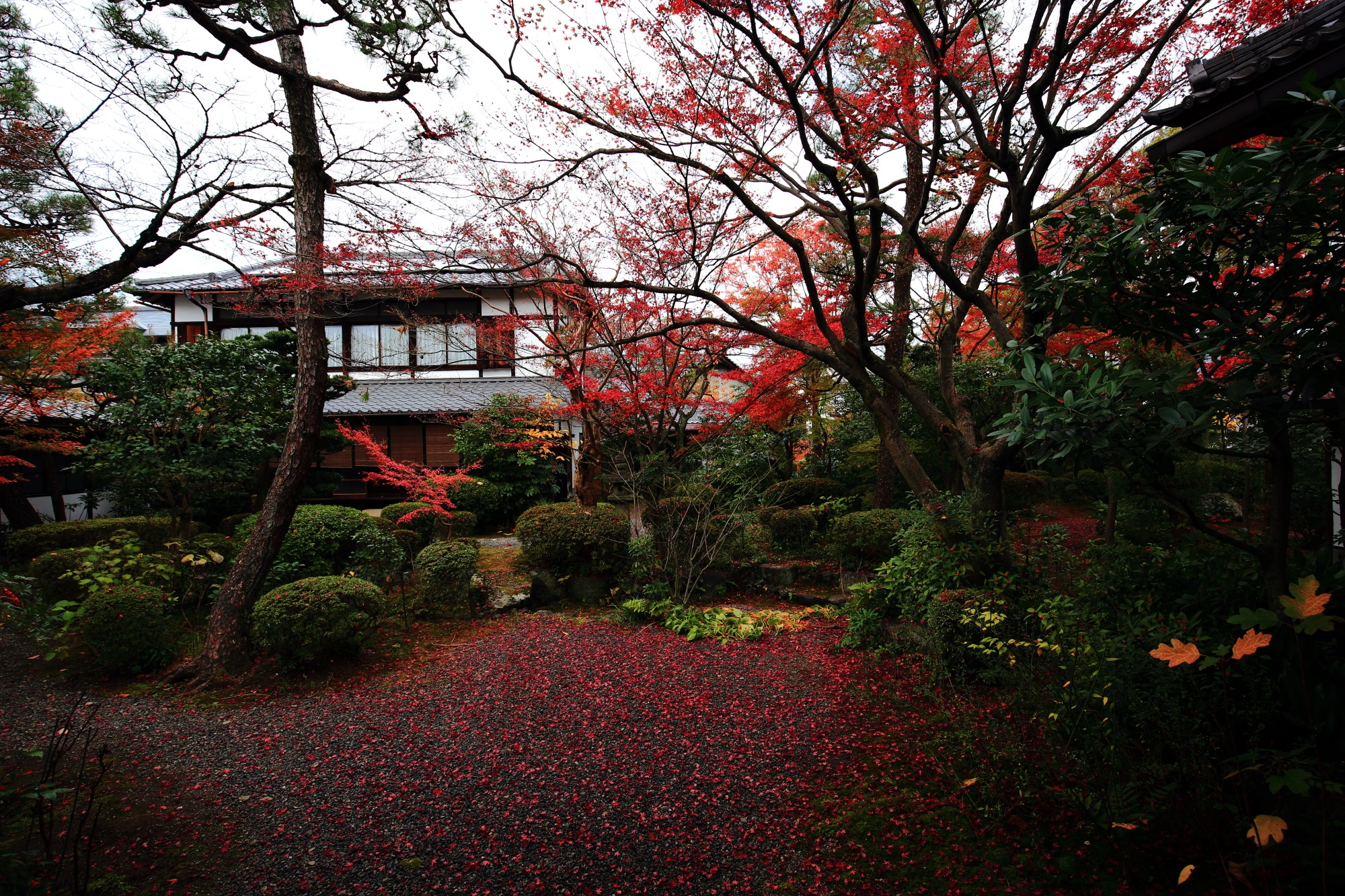 廬山寺の中庭の紅葉と散りもみじ