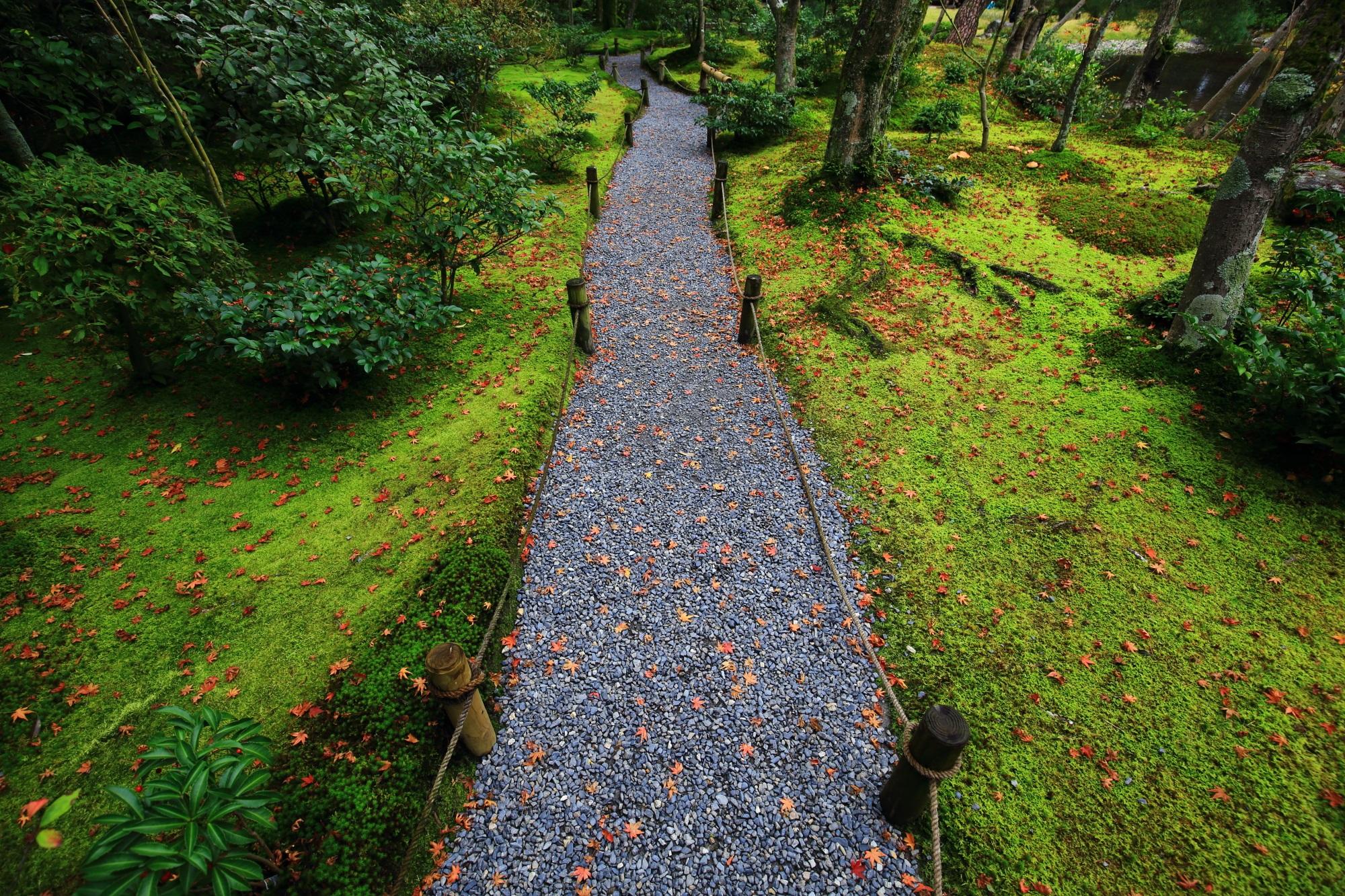 苔につつまれた参道を華やぐ多彩な散りもみじ