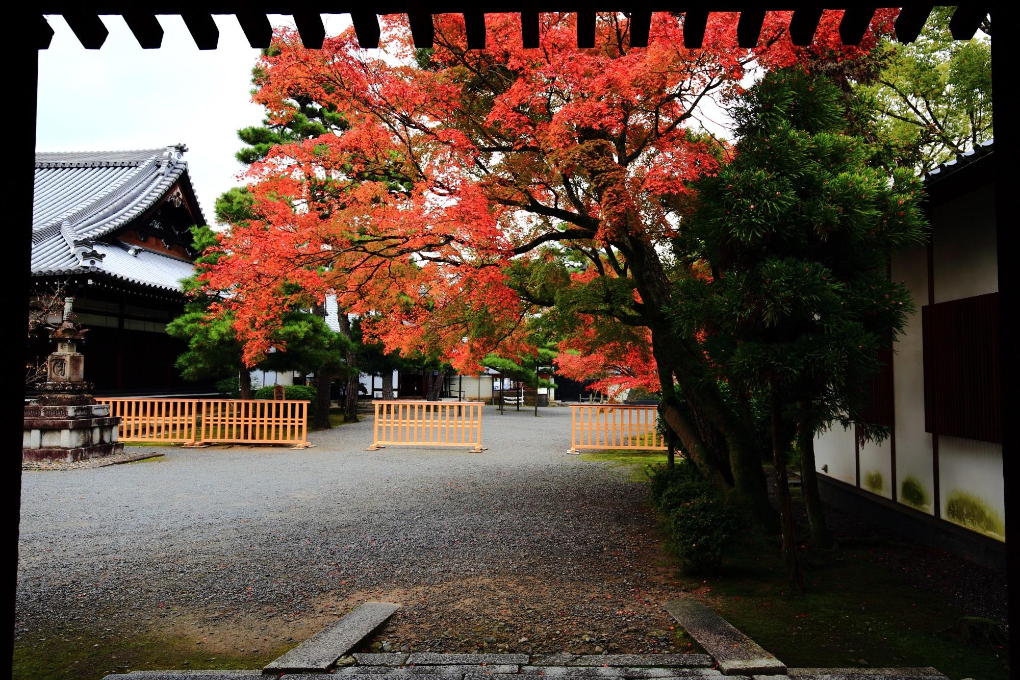 廬山寺の黒門付と紅葉