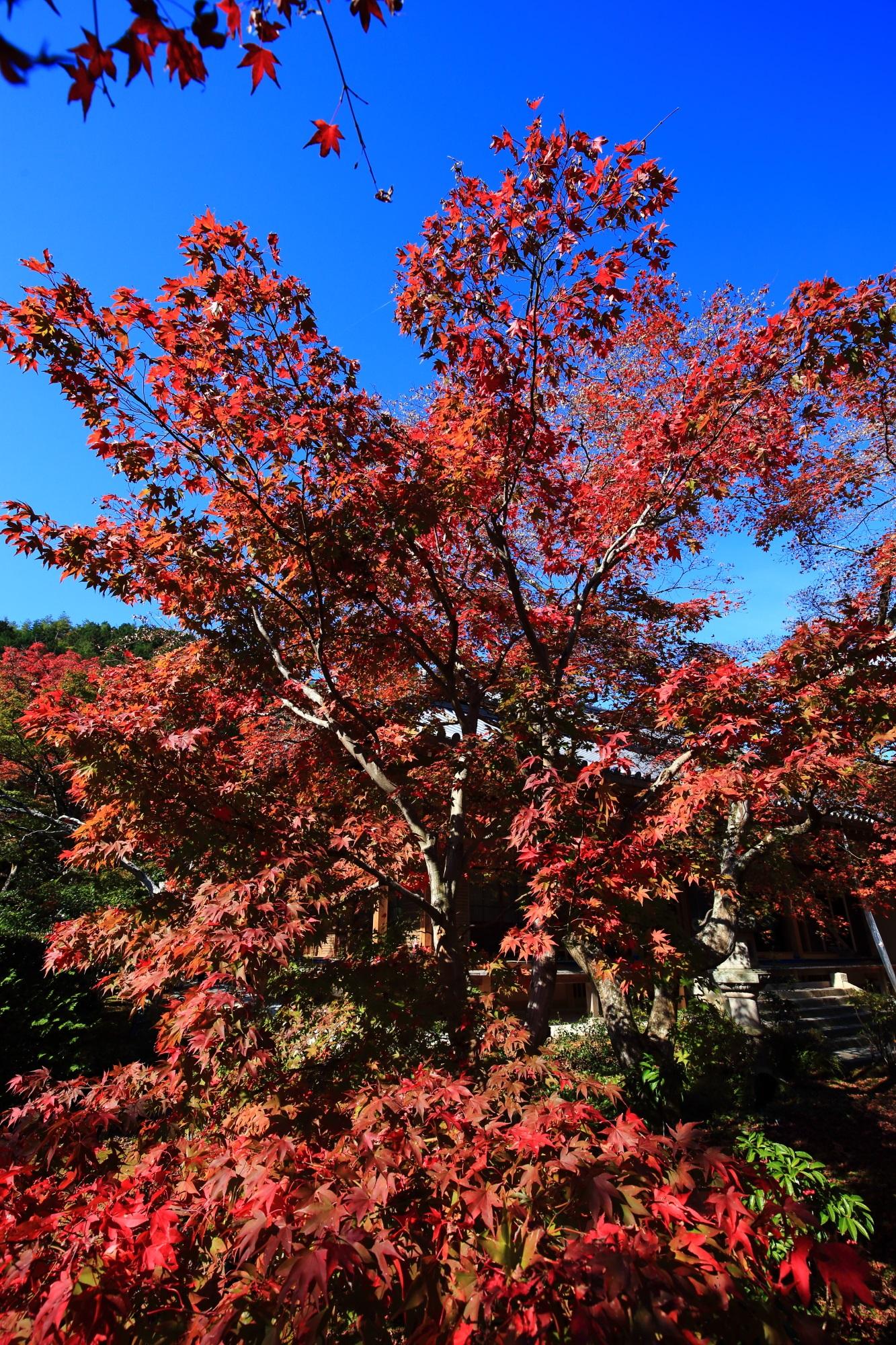 紅葉名所の常寂光寺の美しい紅葉と青空