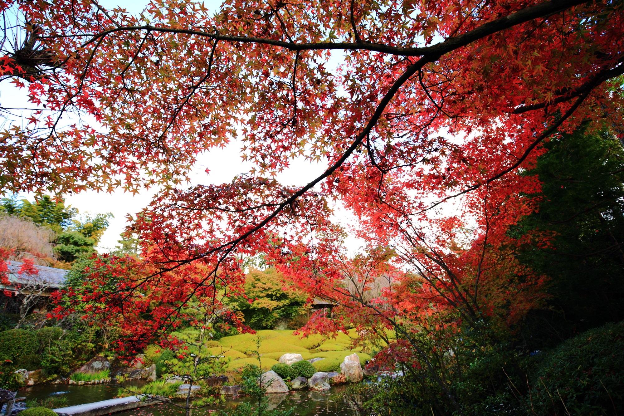 空を秋色に染める優雅な紅葉