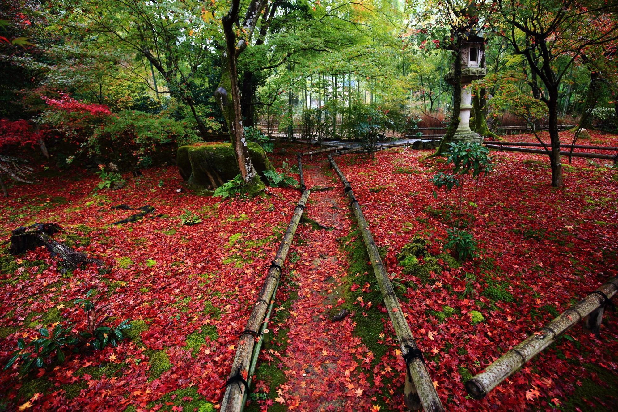 京都の紅葉の穴場の直指庵の苔庭の優美な散りもみじ
