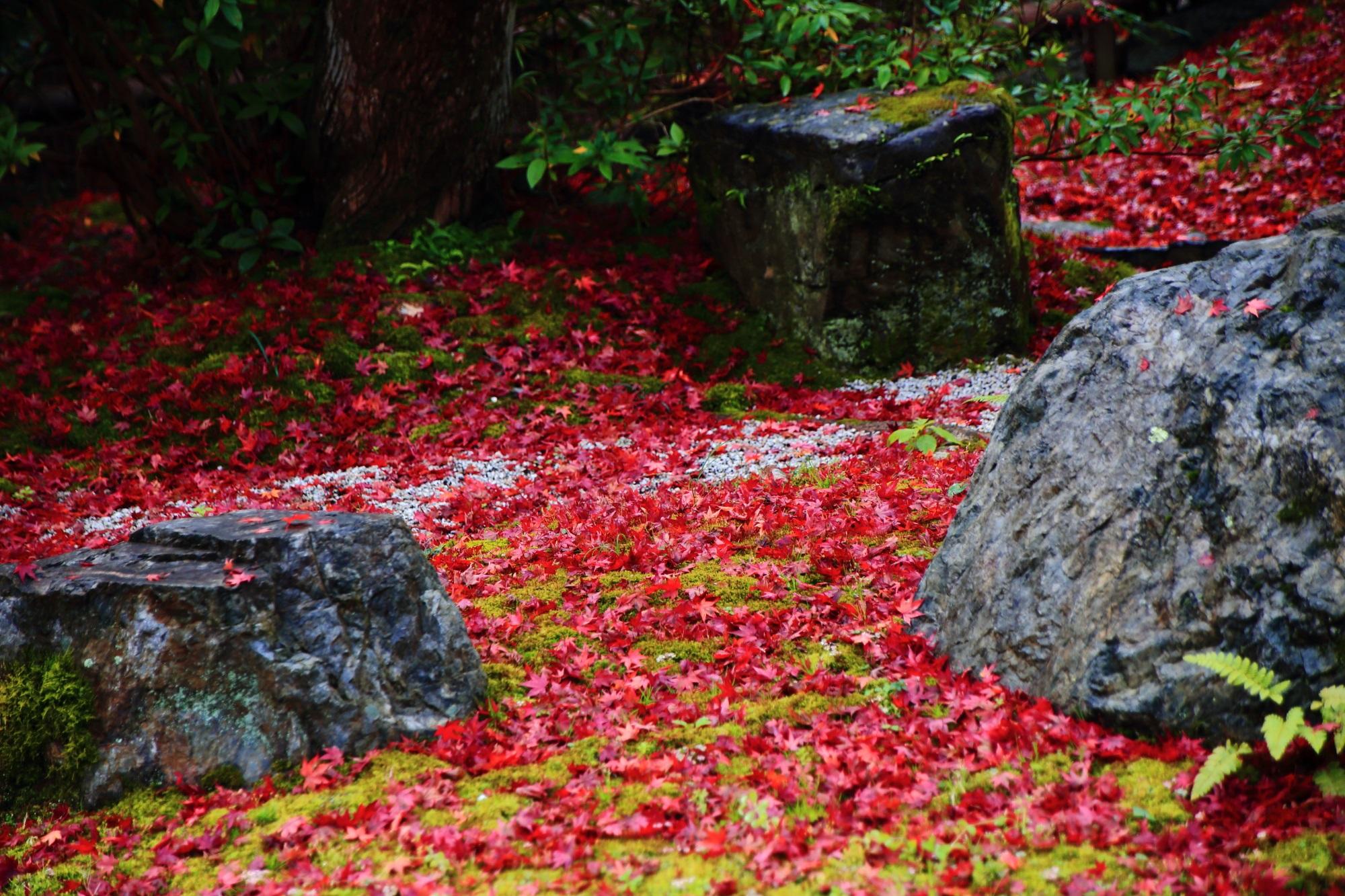 鮮やかな散りもみじに覆われた直指庵の阿弥陀堂庭園