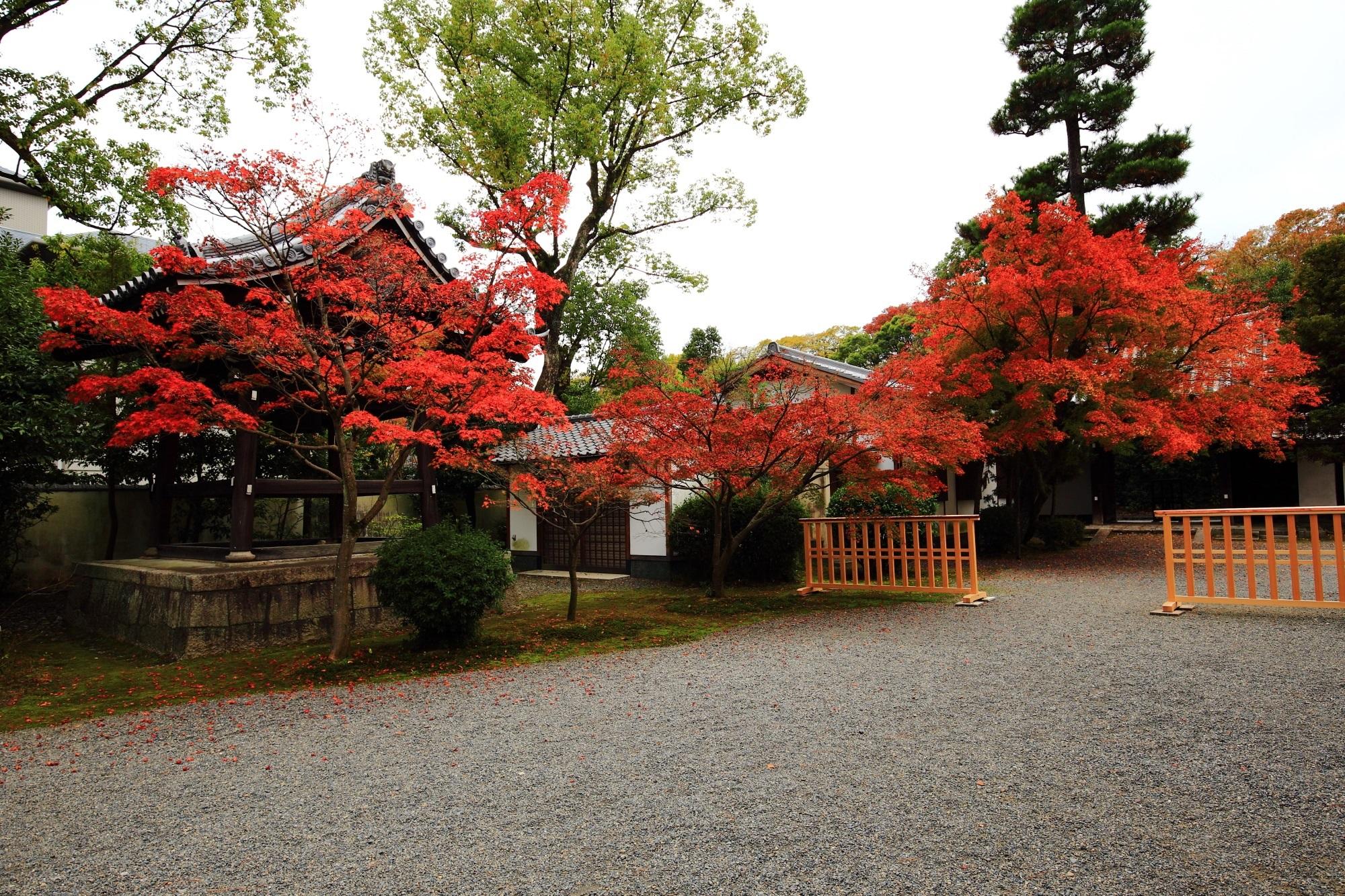 流れるように境内を彩る見事な紅葉