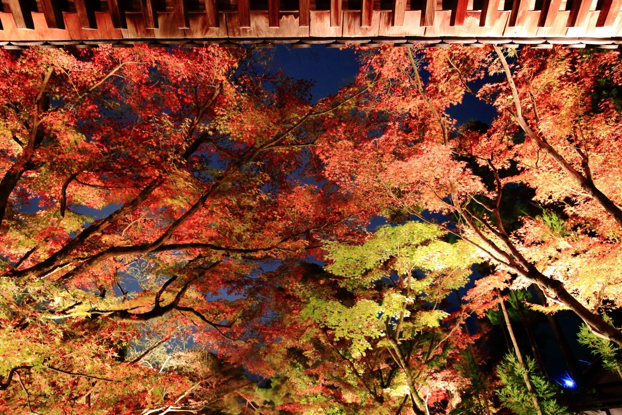 永観堂の中門付近の美しい紅葉ライトアップ
