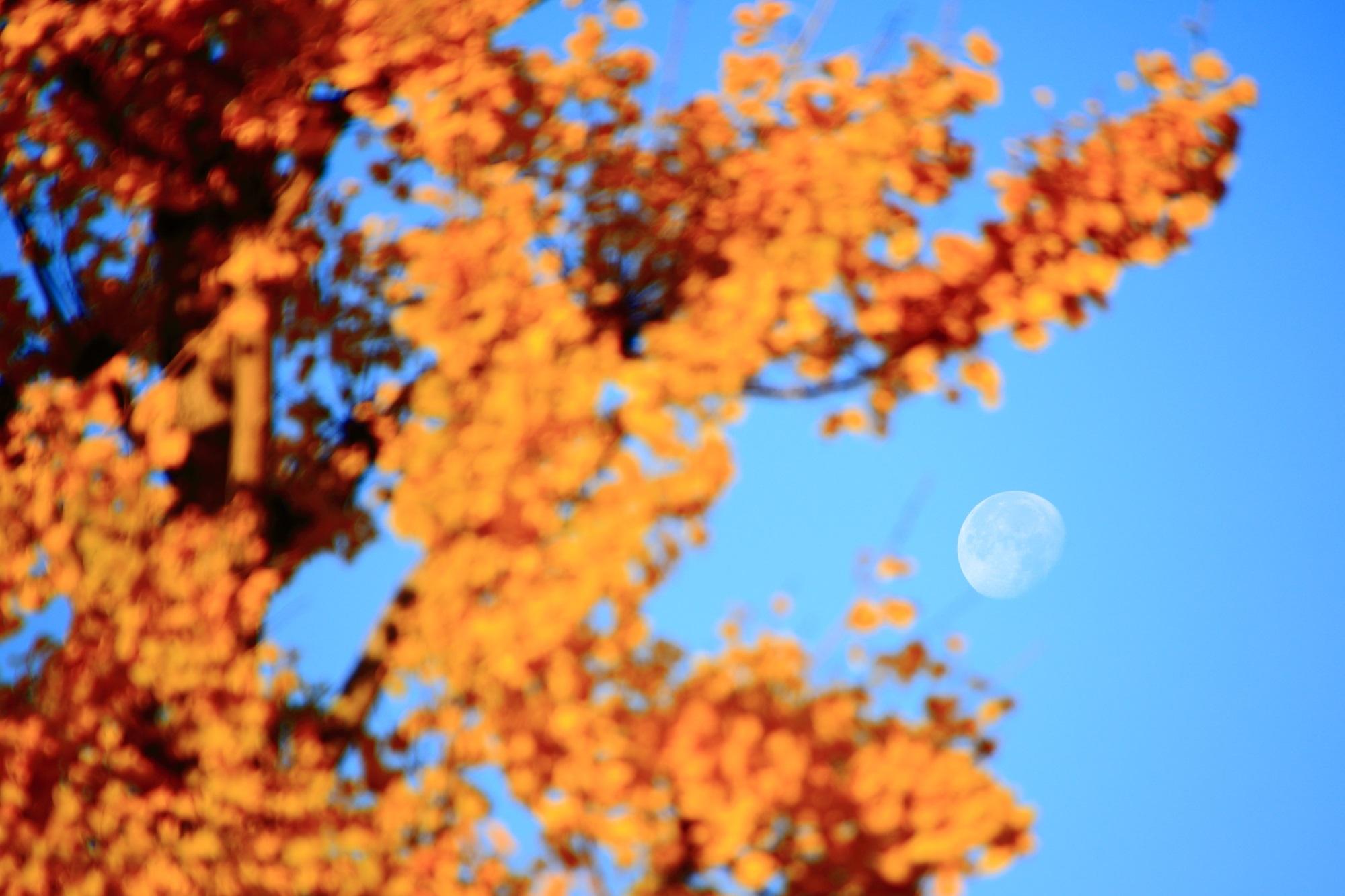 銀杏と青空に浮かぶお月さん