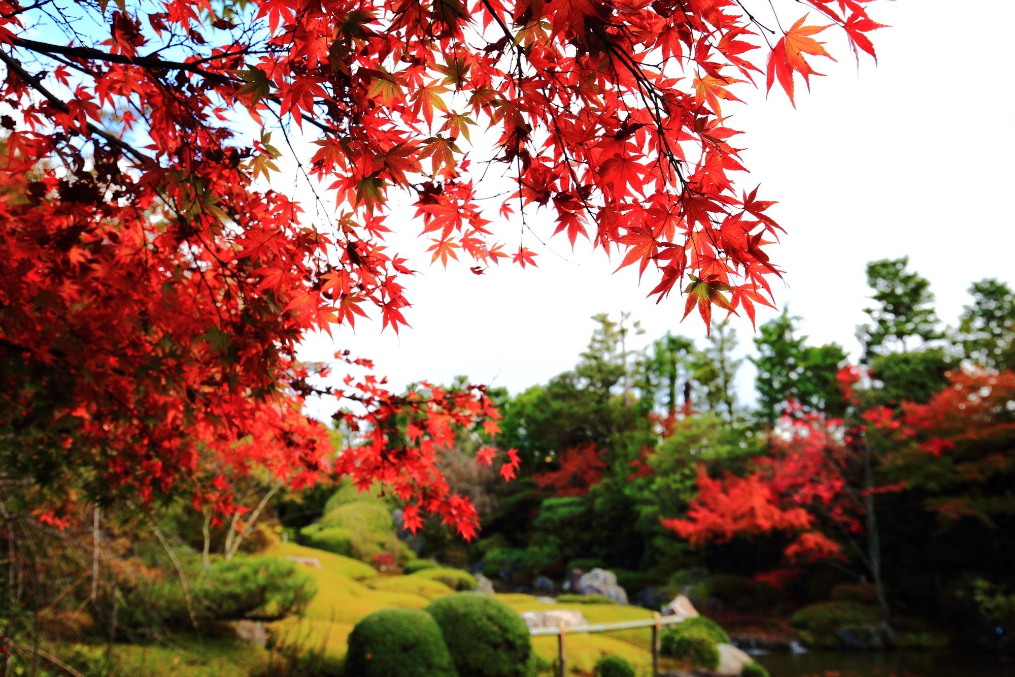 美しい水と緑の庭園を秋色に染める鮮やかな紅葉