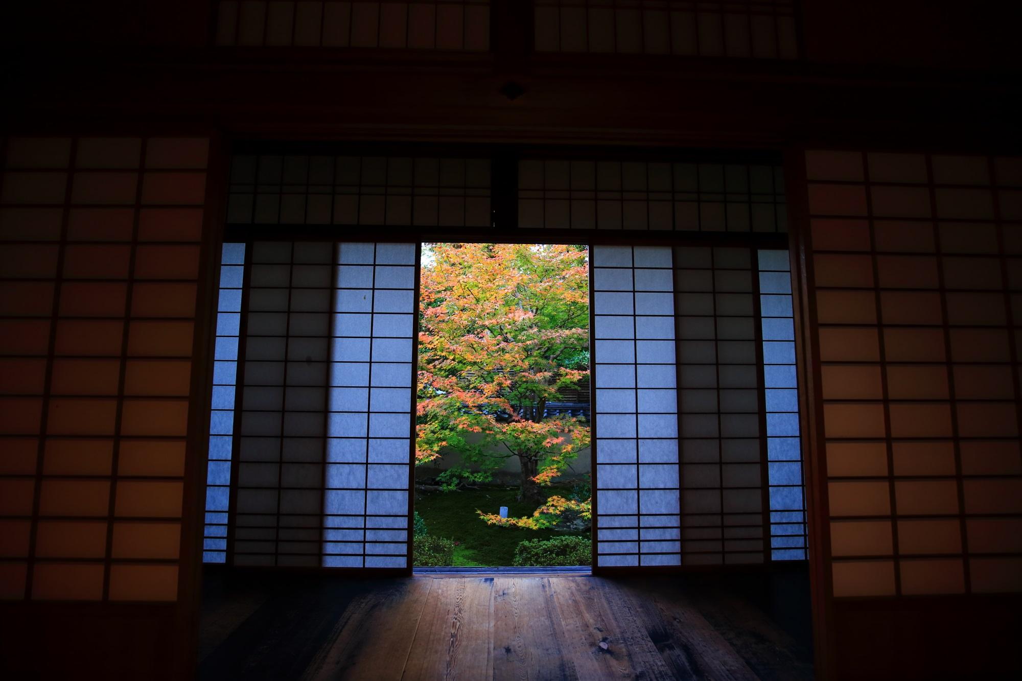 泉涌寺別院の雲龍院の書院悟之間の紅葉