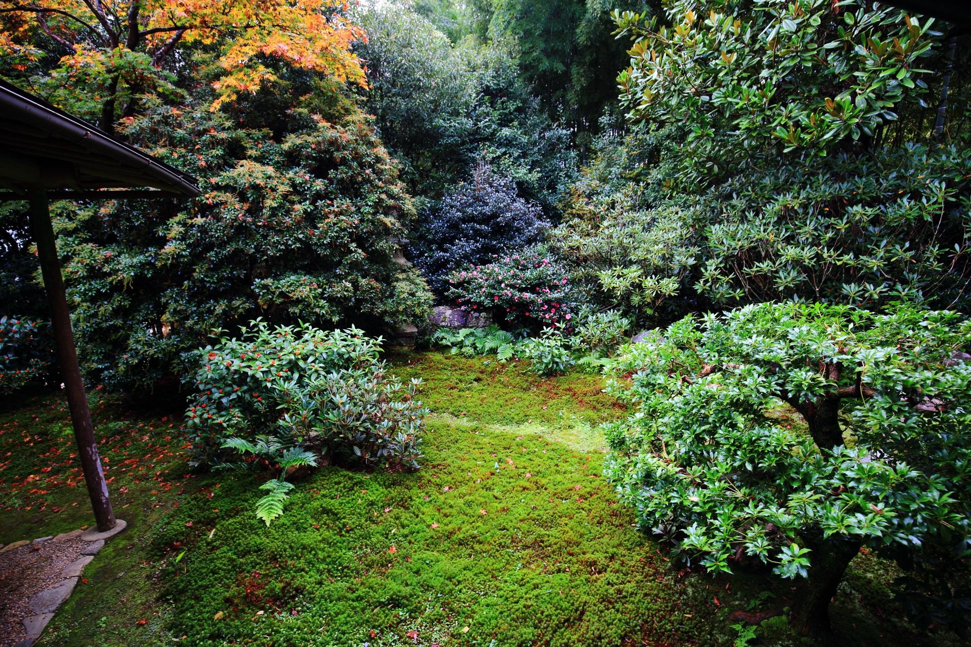 Jikisian Kyoto Saga 本堂 庭園 秋 散りもみじ 苔