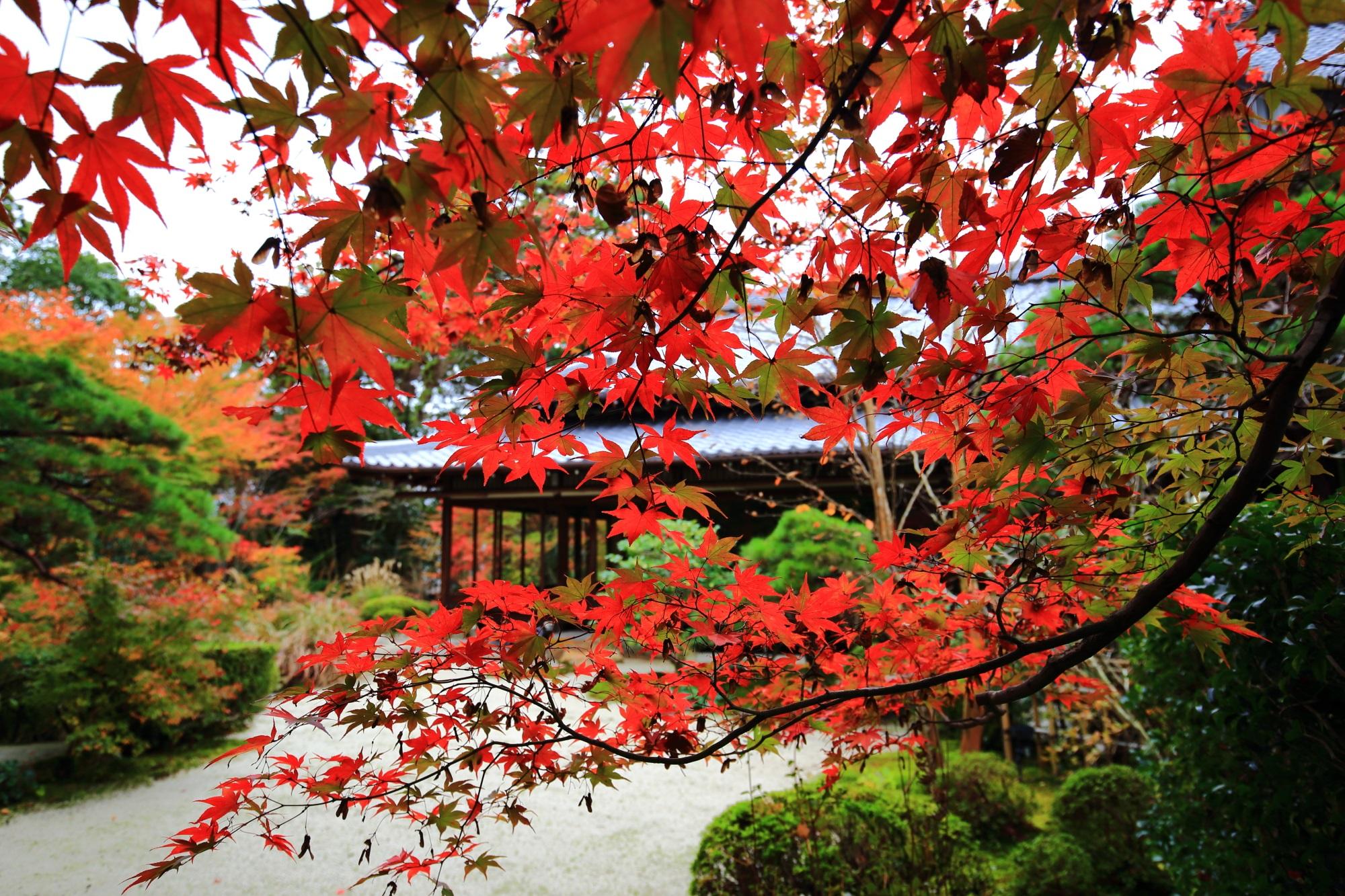 赤い紅葉につつまれる書院と庭園