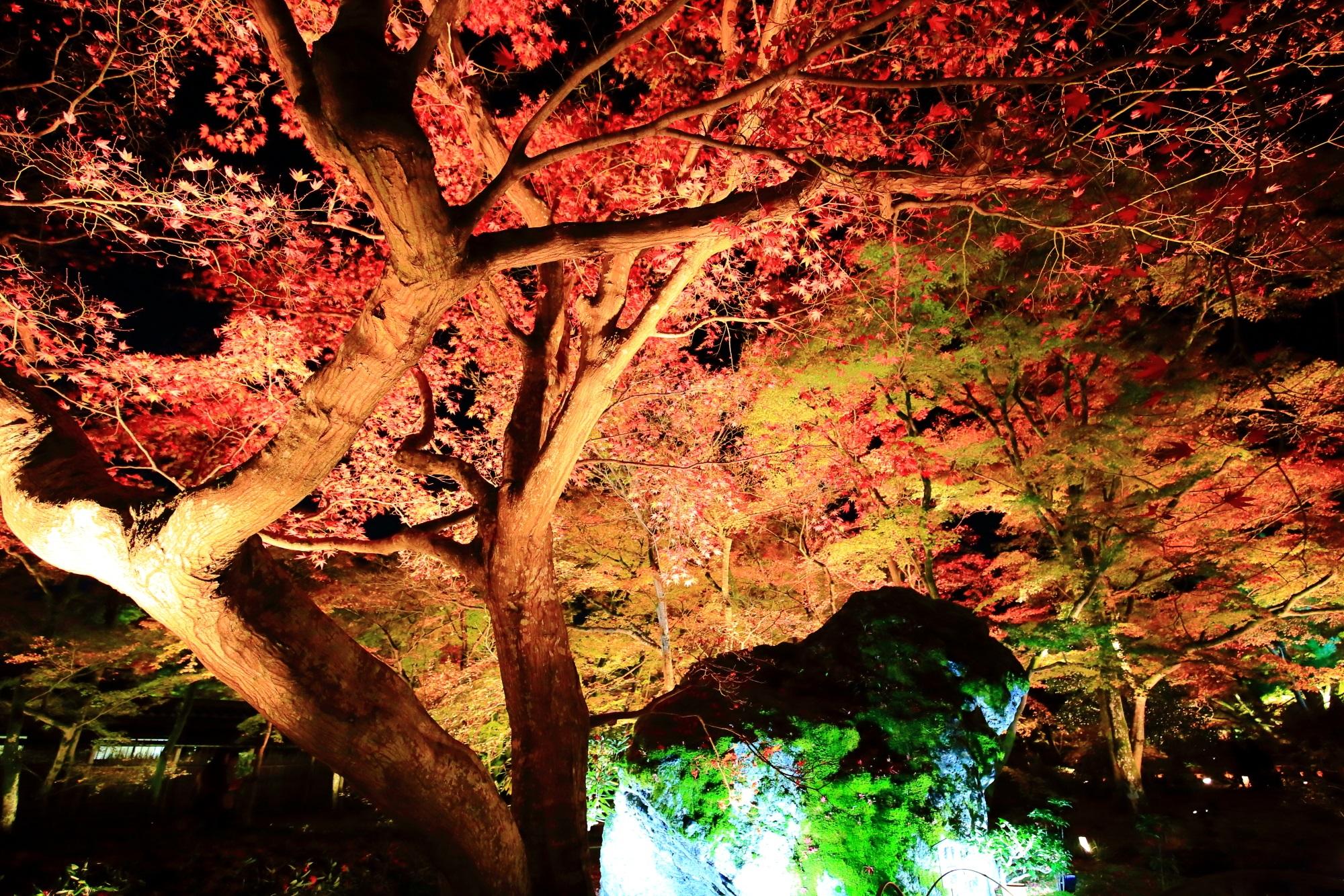 宝厳院 獅子吼の庭 紅葉 秋