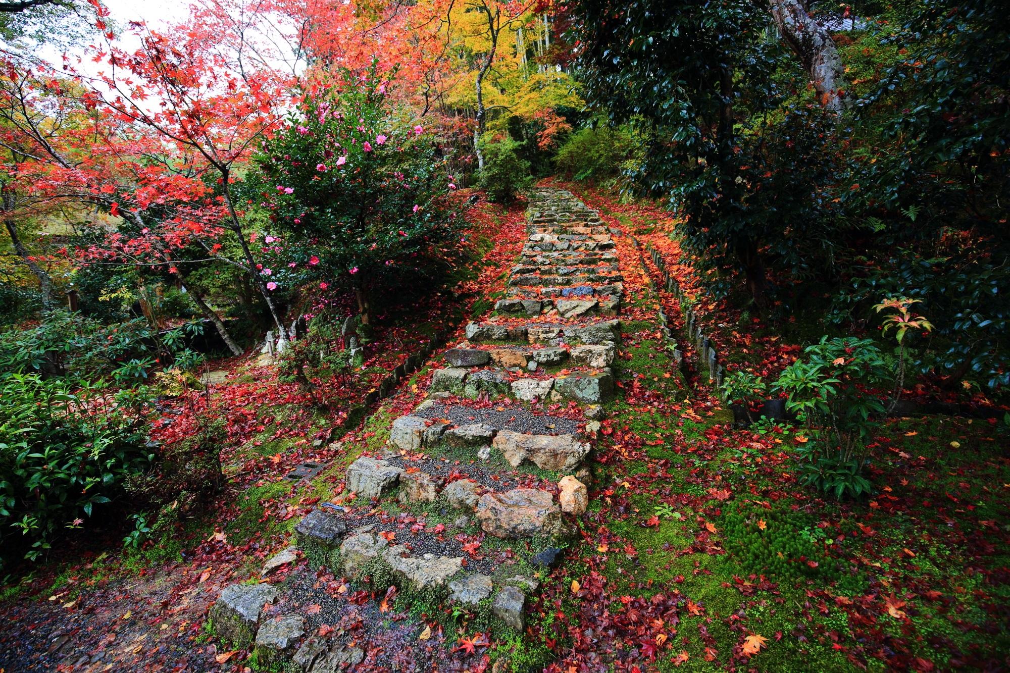 紅葉の名所の直指庵の開山堂前の石段の鮮やかな散りもみじ