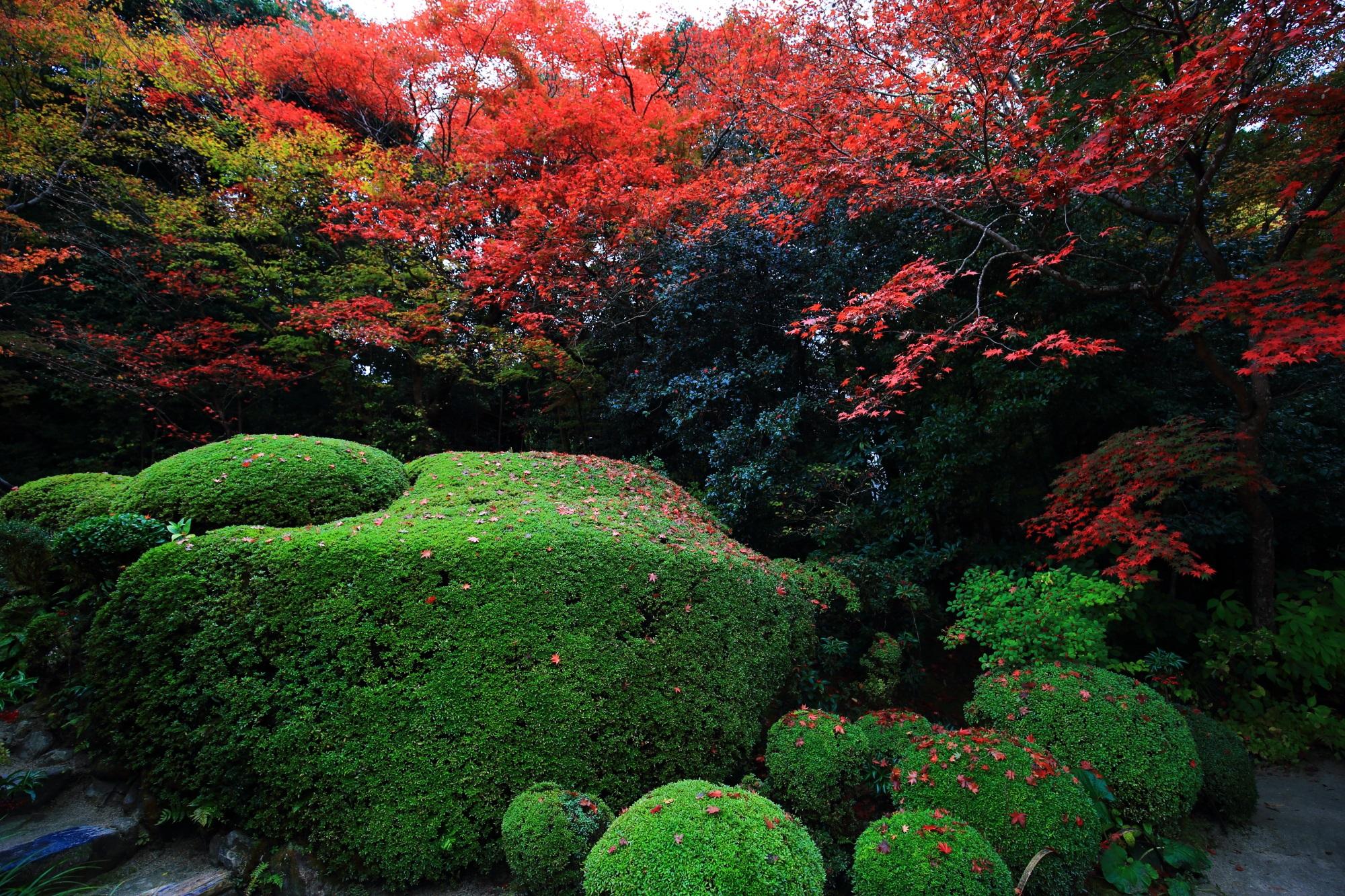 名刹の詩仙堂の風情ある紅葉