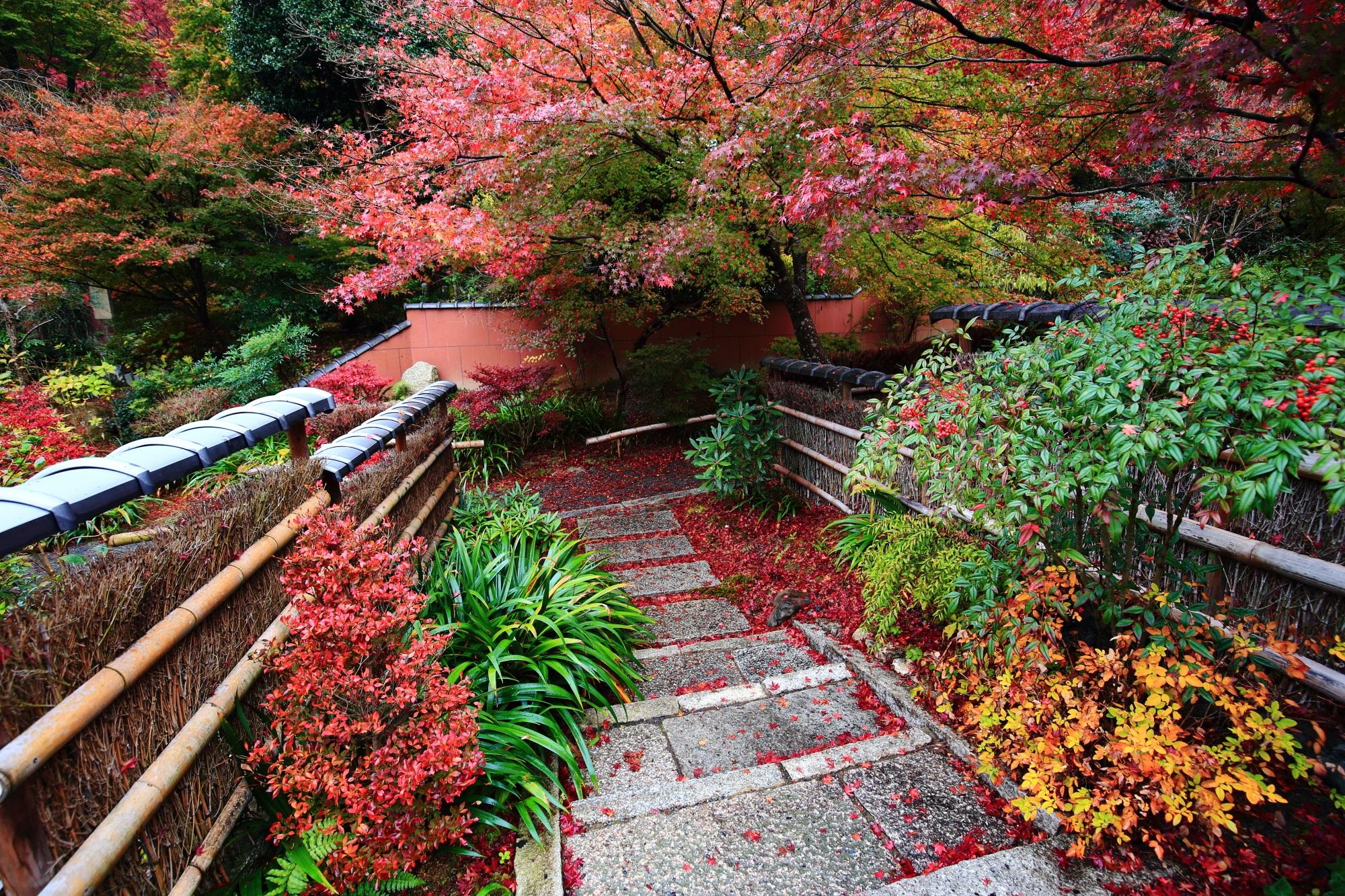 じきしあんの阿弥陀堂前の見ごろの優美な紅葉