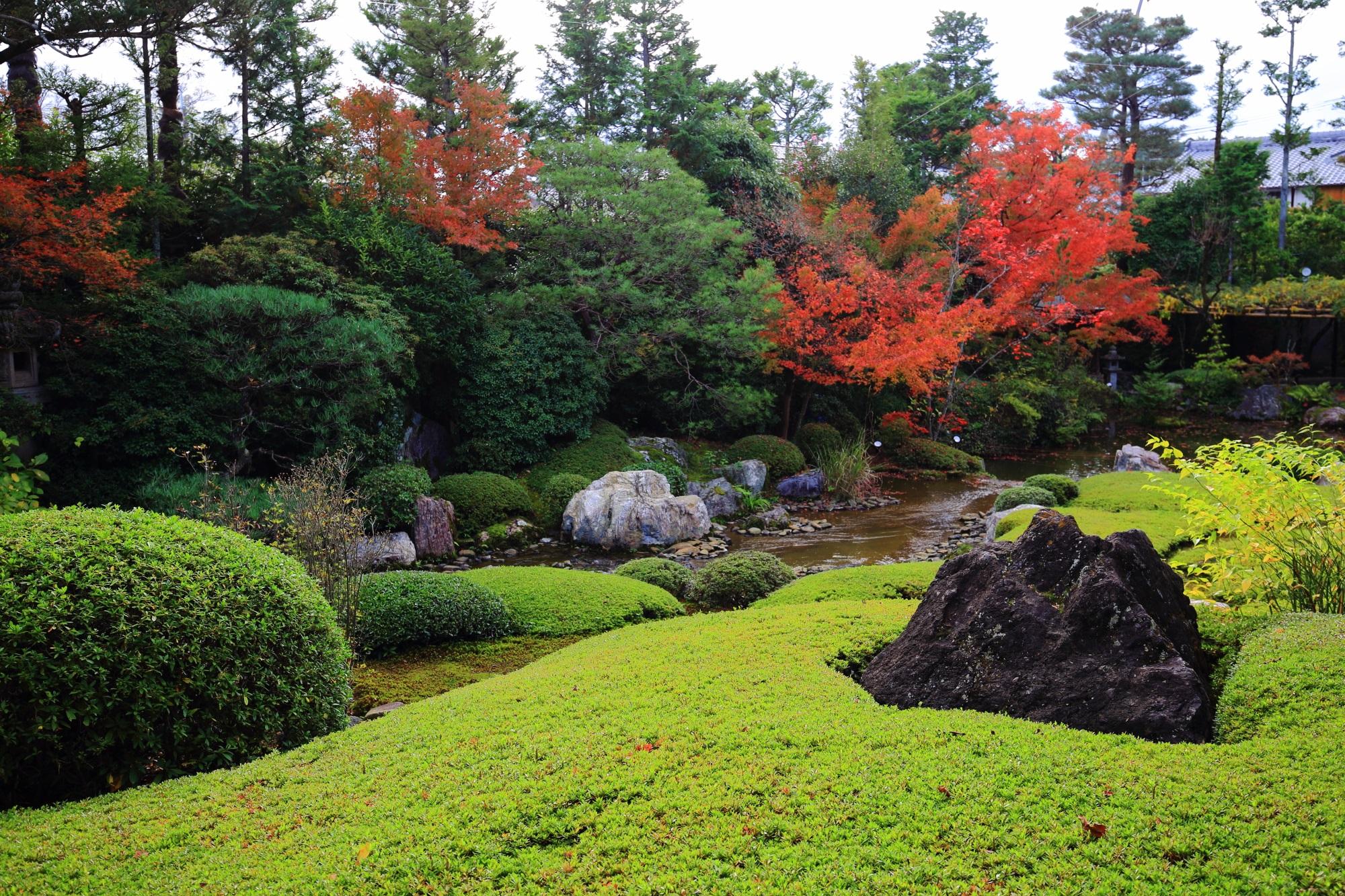 紅葉が鮮やかに色づく退蔵院の余香苑