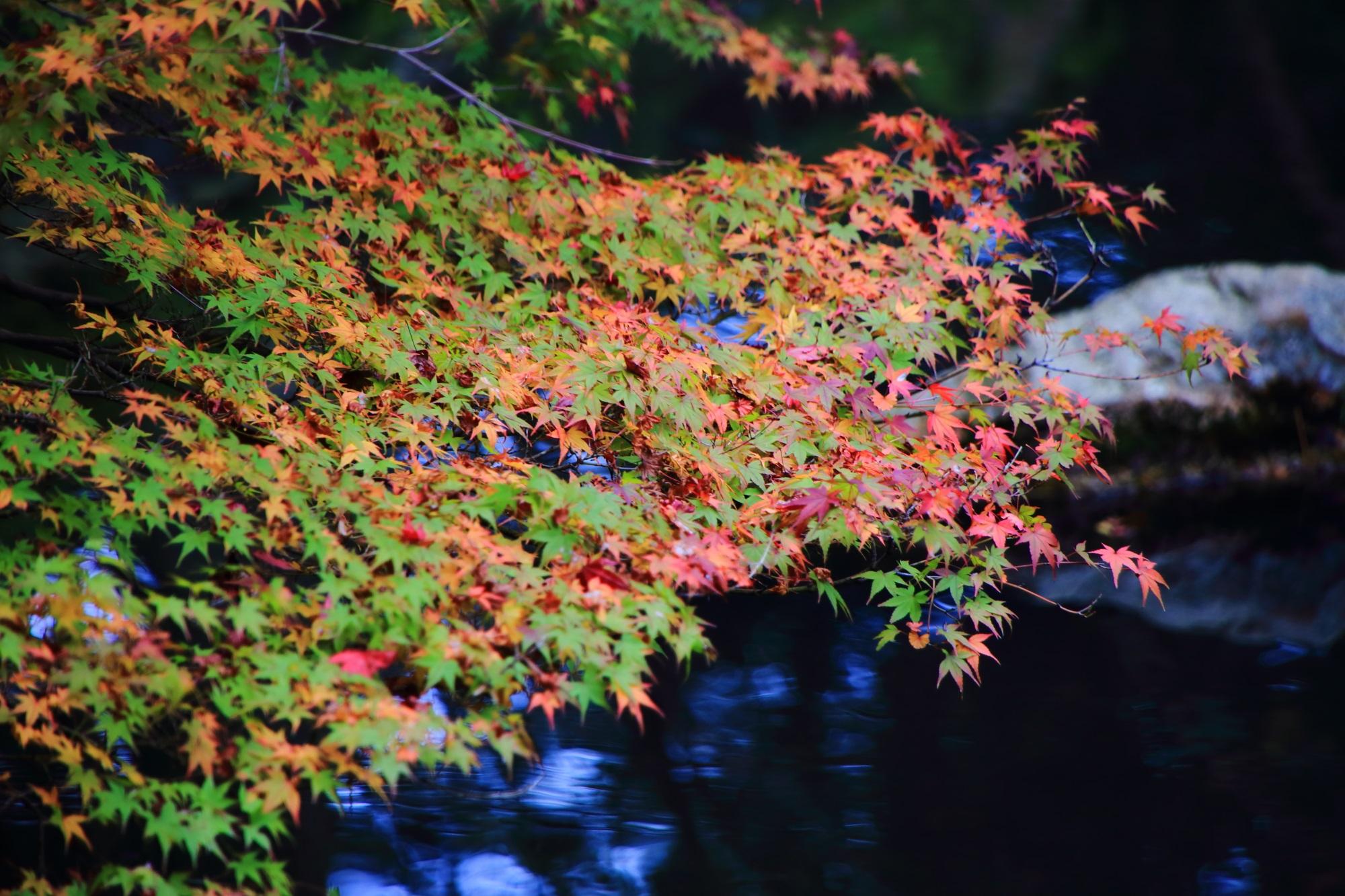 緑のままの葉がたくさん残っている天授庵の紅葉