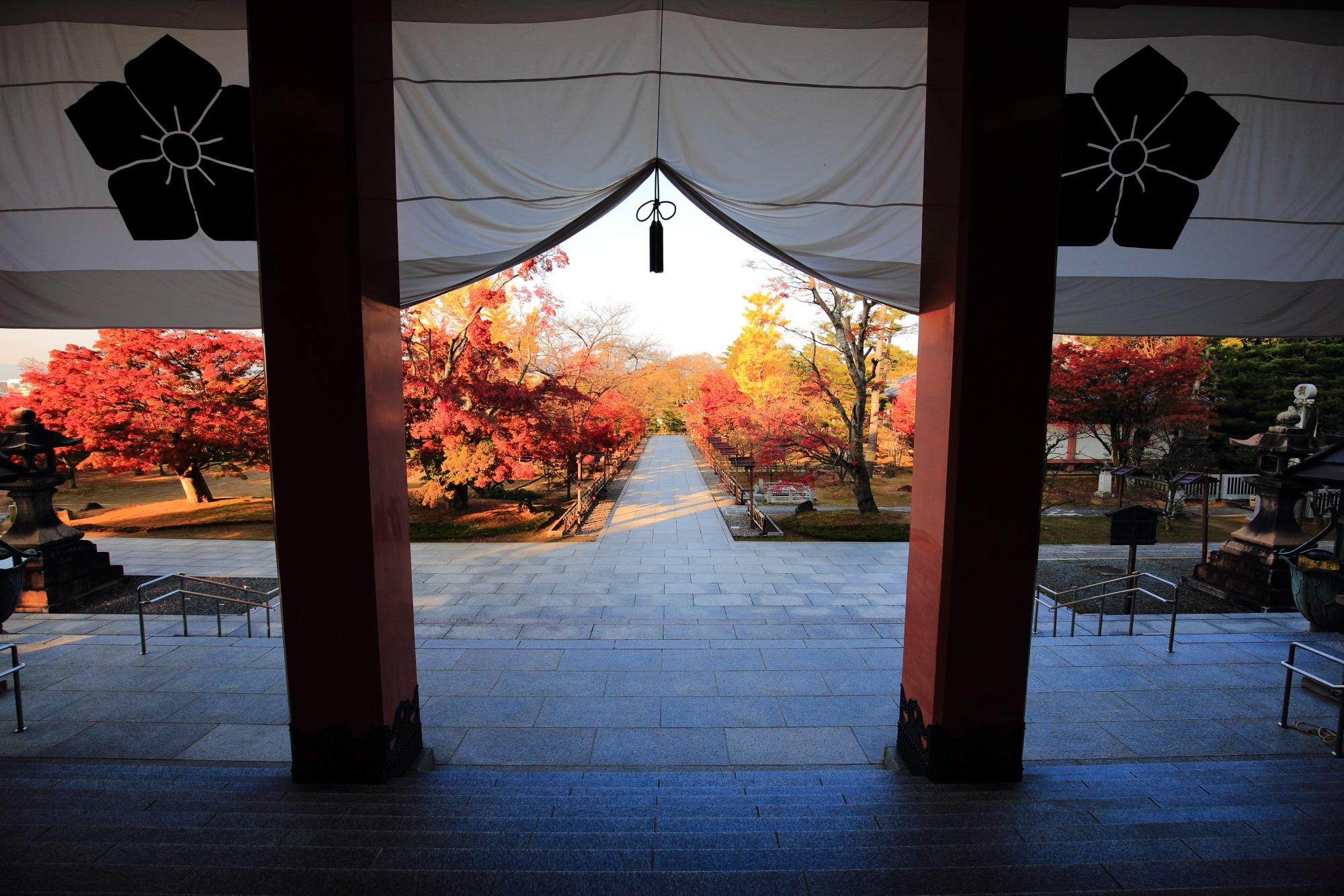 金堂から眺めた紅葉と銀杏の溢れる智積院の参道