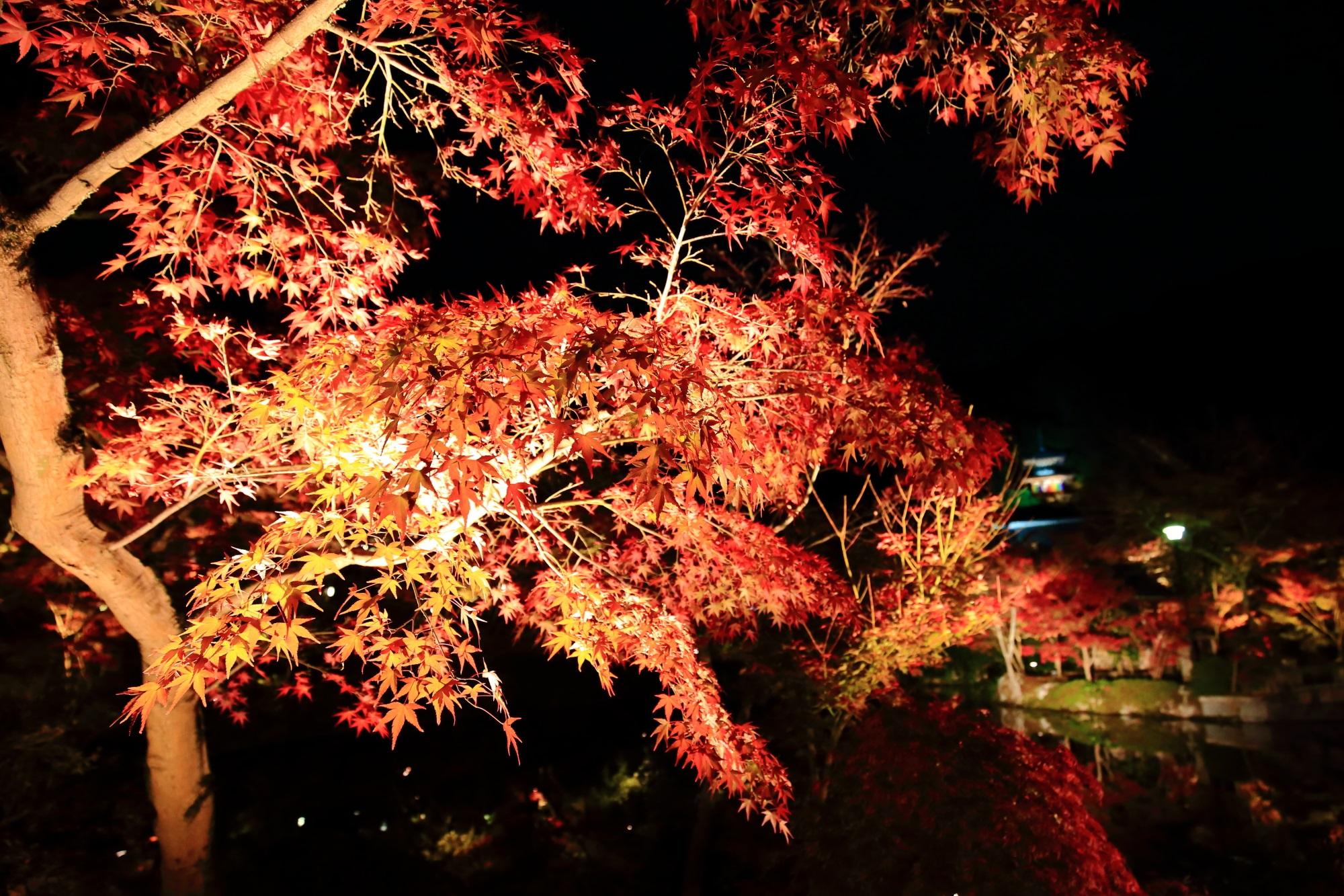 永観堂の放生池の綺麗な紅葉と多宝塔