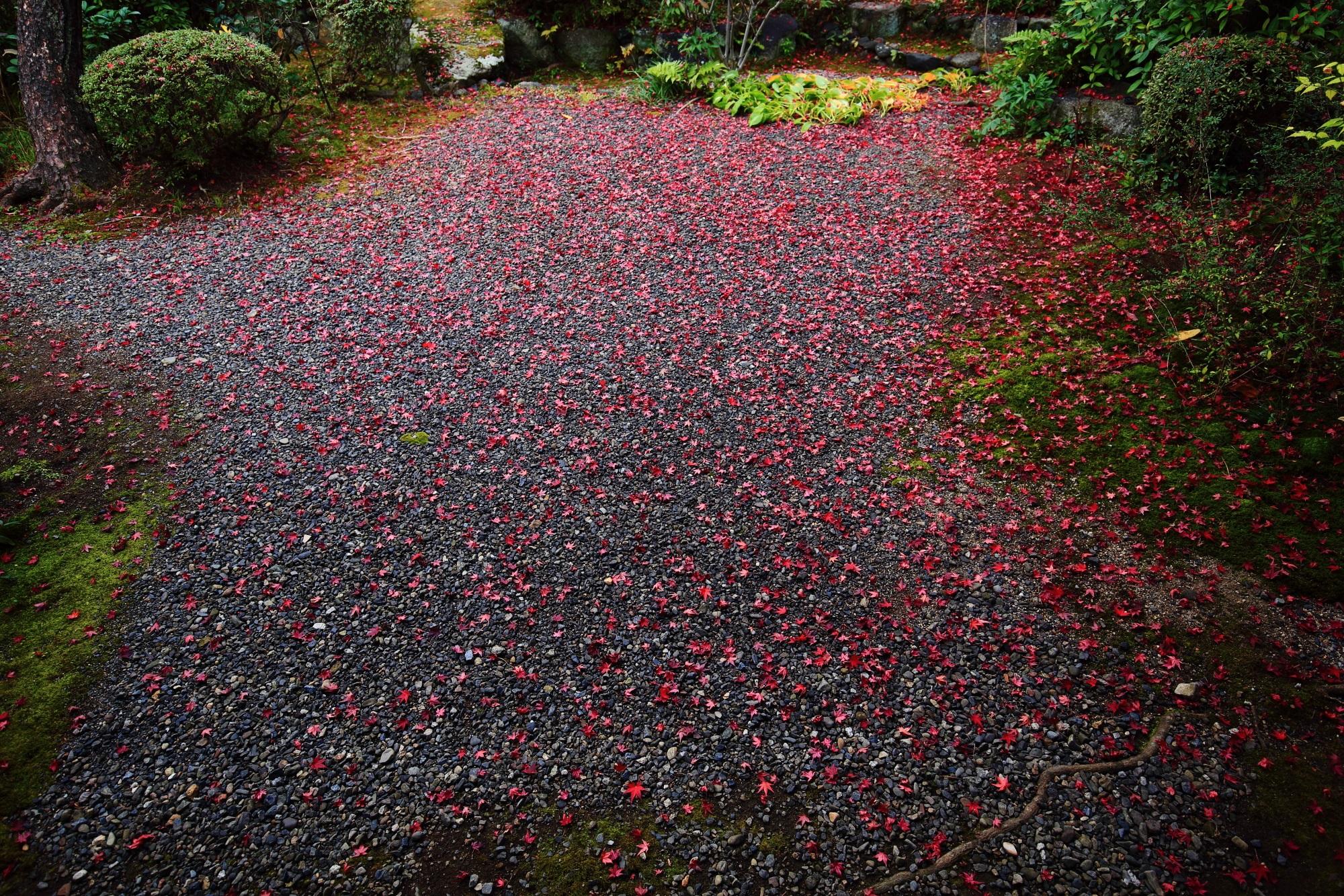 紅葉の名所の廬山寺の中庭の美しい散りもみじ
