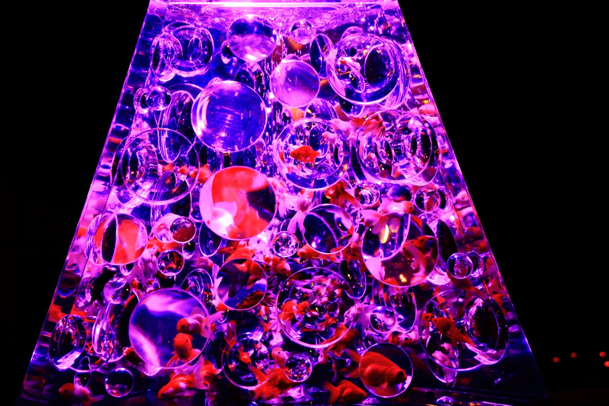 アートアクアリウム城 金魚の舞 リフレクトリウム 二条城