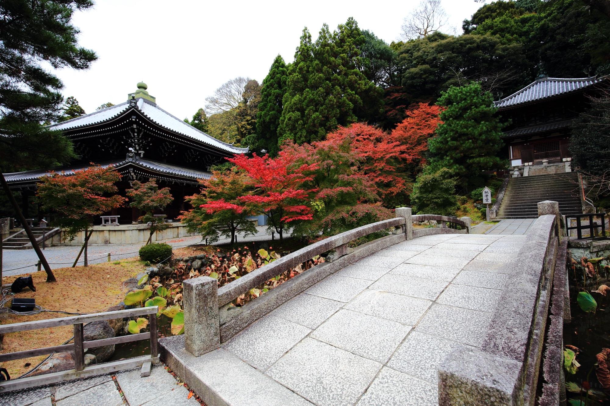 知恩院の納骨堂前の深い緑に映える紅葉