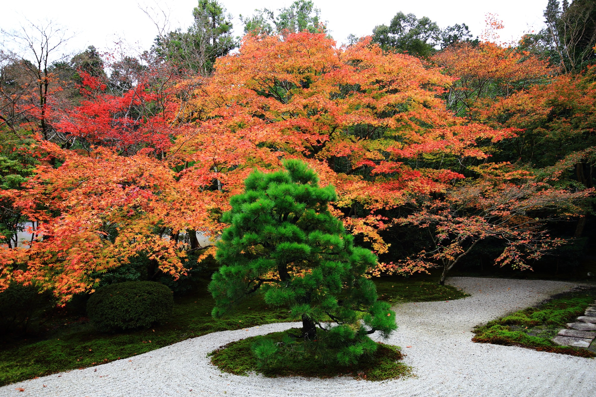 向かって右側のオレンジ系の見ごろの紅葉