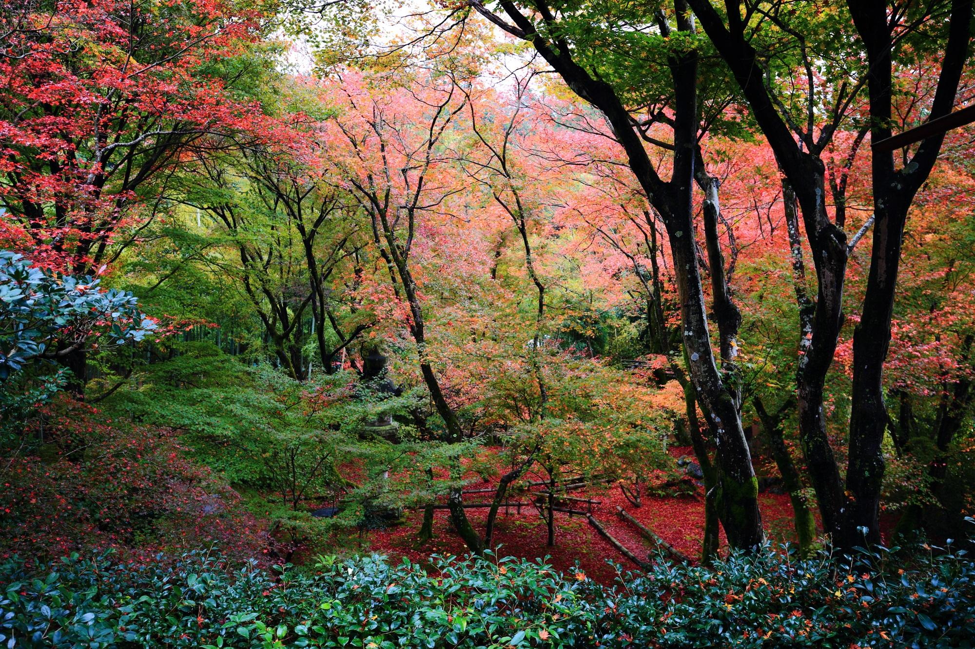 直指庵(じきしあん)の本堂から眺めた美しい紅葉