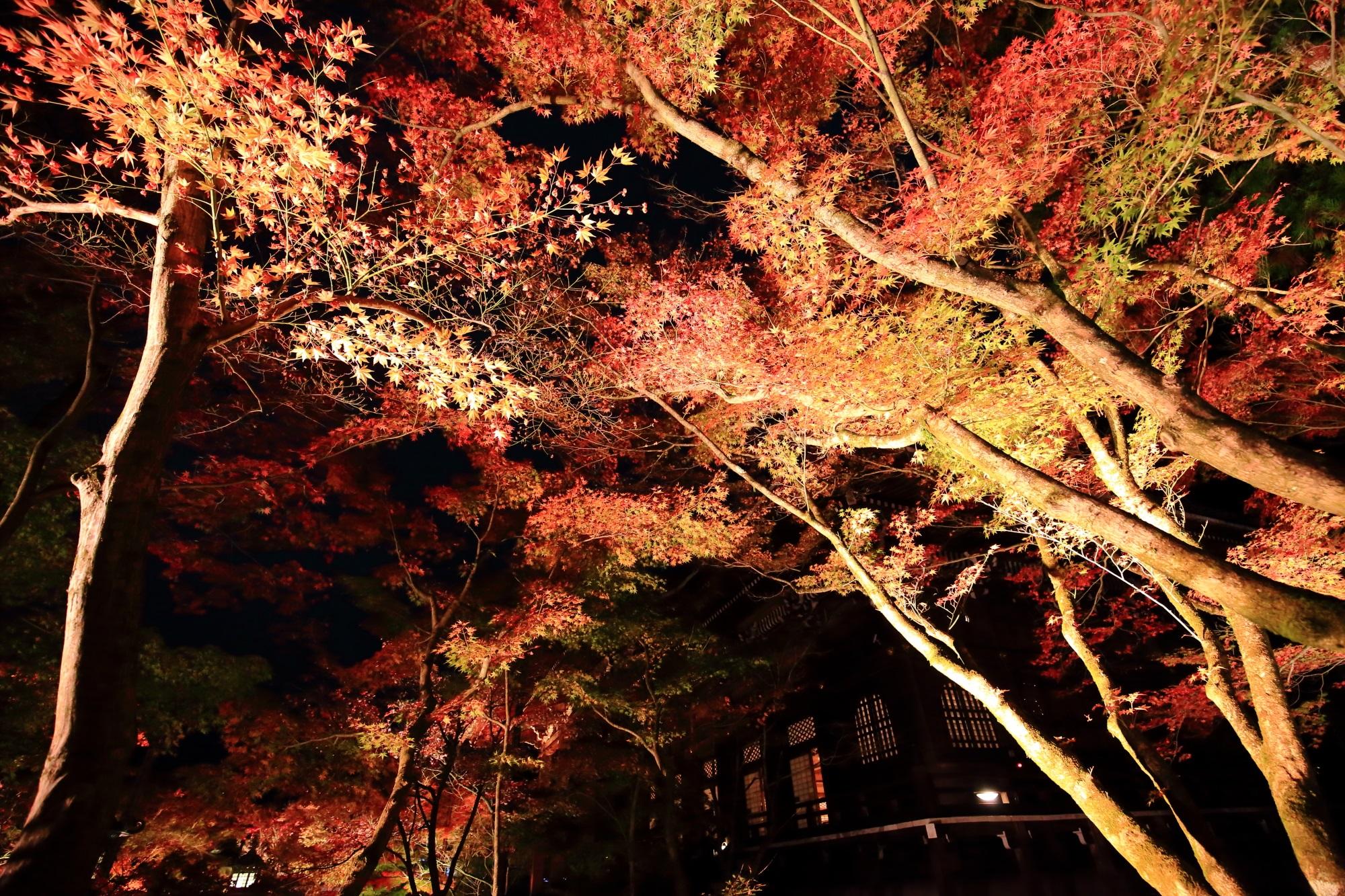 永観堂の御影堂前の優雅な紅葉