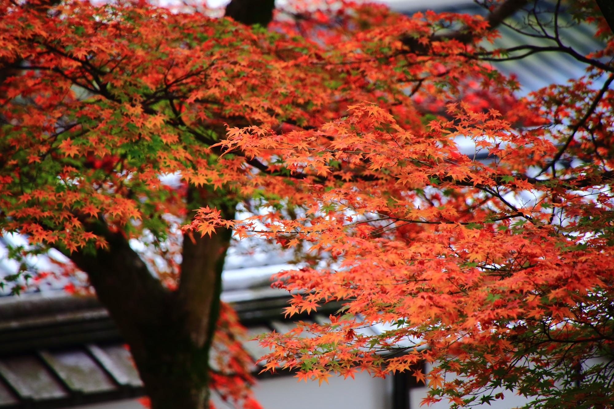 静かな御廟をしっとりと華やぐ趣きある紅葉