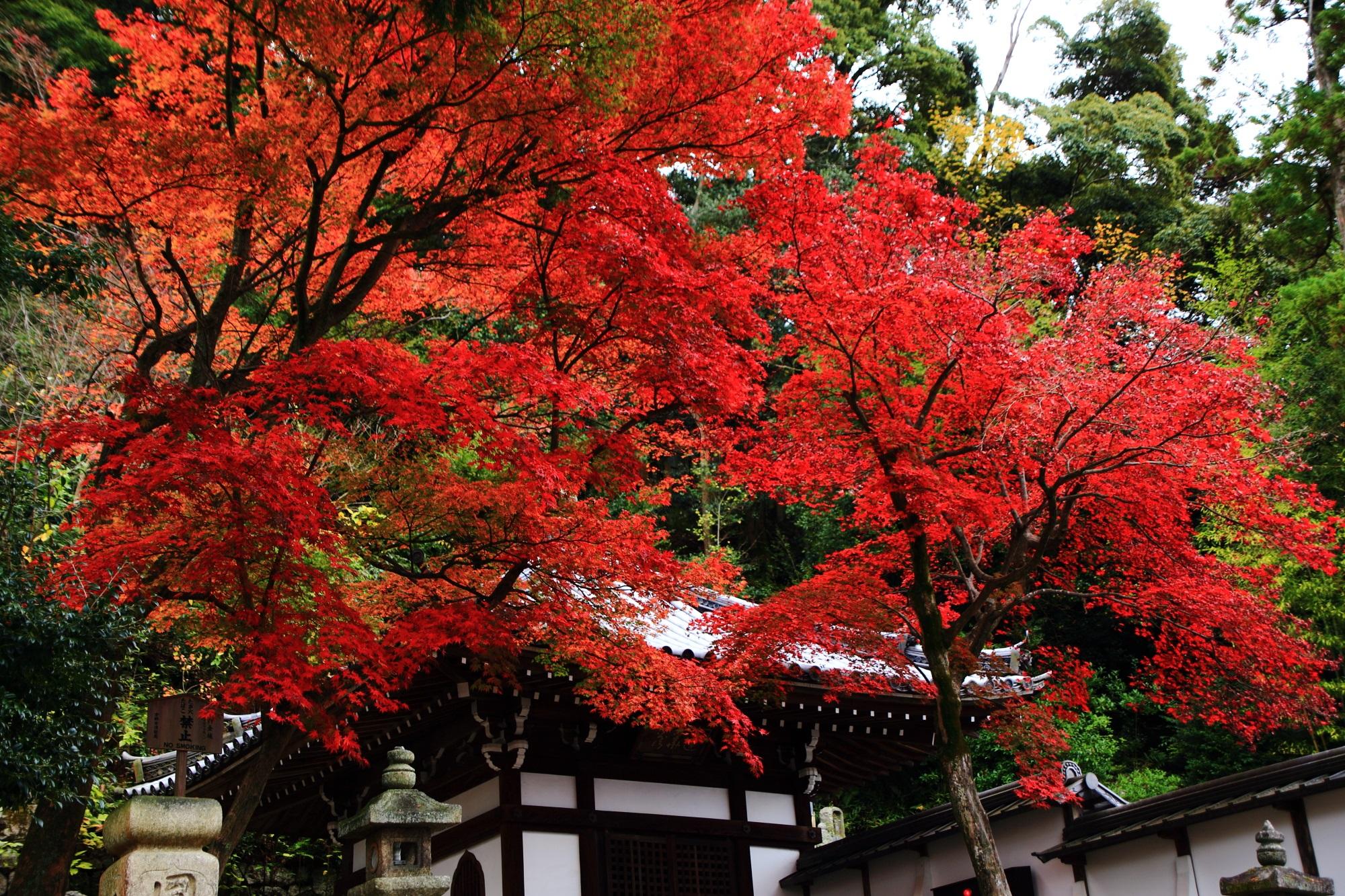白壁のお堂に映える真っ赤な紅葉