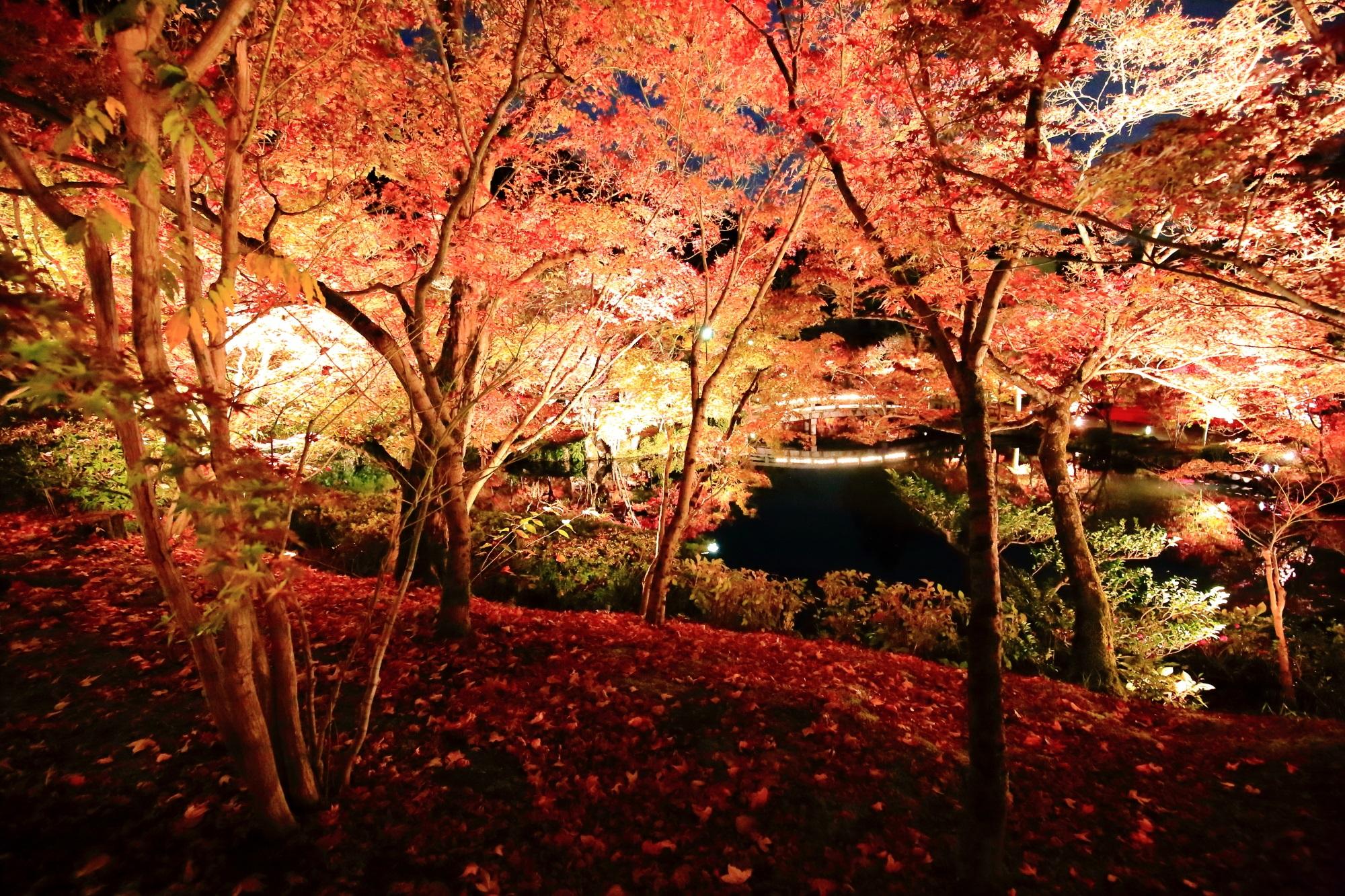 永観堂の放生池の鮮やかな紅葉と散りもみじ