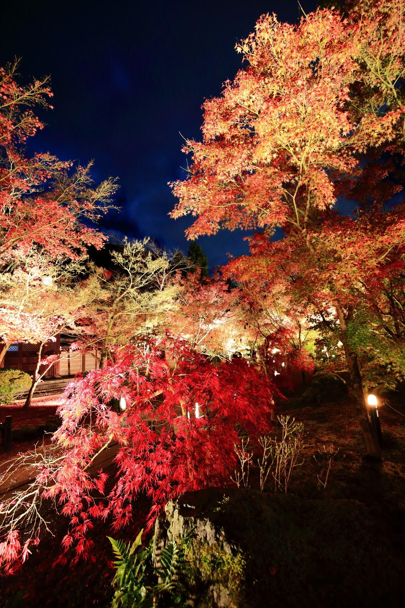 永観堂の美しい紅葉ライトアップ