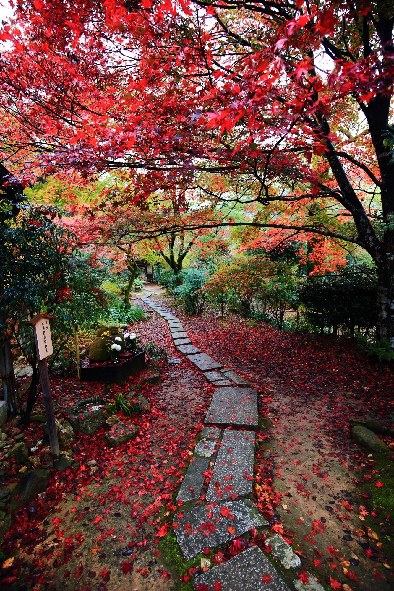 もみじの穴場の直指庵(じきしあん)の本堂前の見ごろの紅葉と散りもみじ