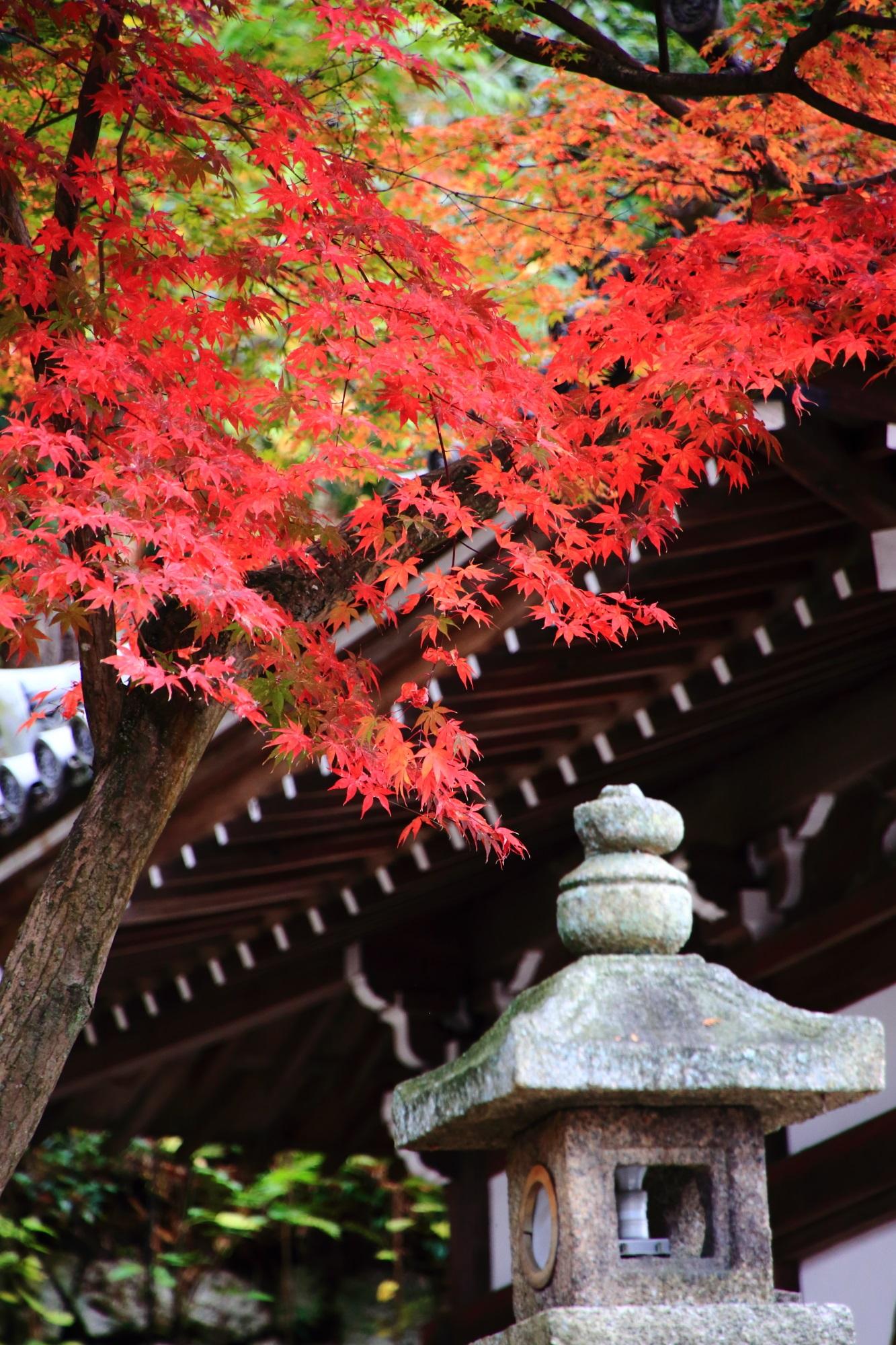 秋風にそよぐ知恩院御廟の鮮やかな紅葉