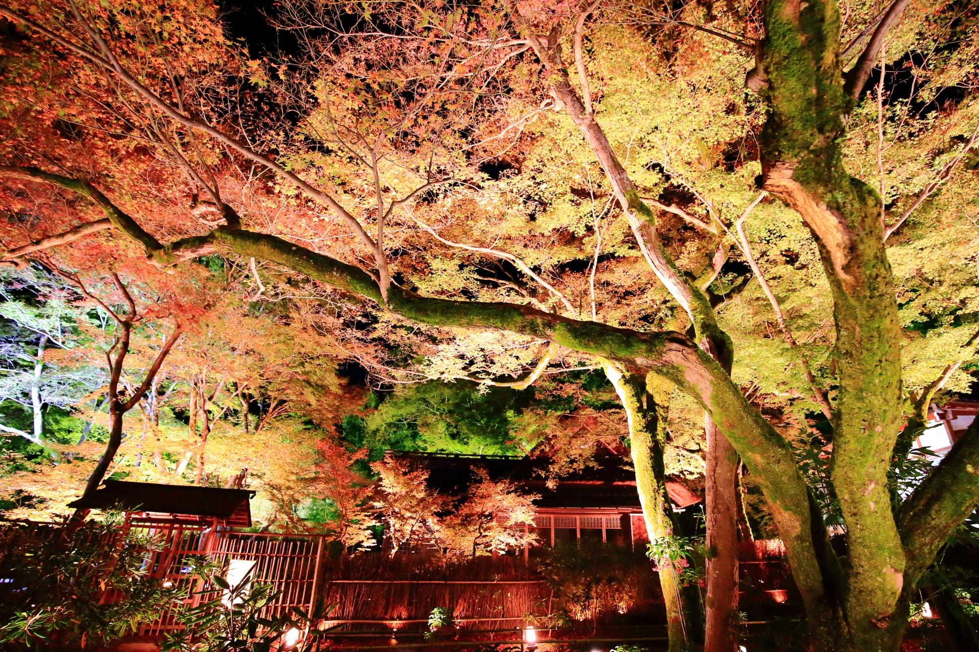 宝厳院の本堂付近の綺麗な紅葉ライトアップ