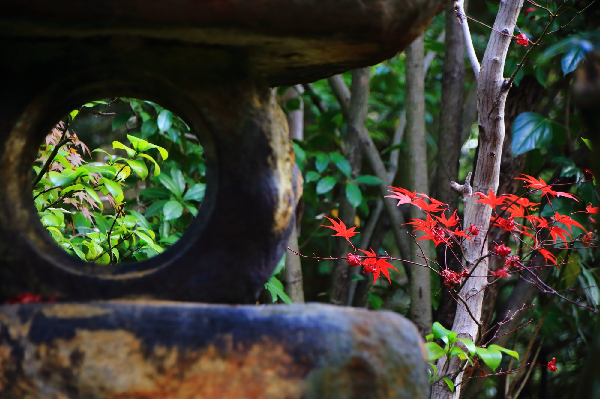 燈籠の奥に見える鮮やかな赤い紅葉と淡い緑