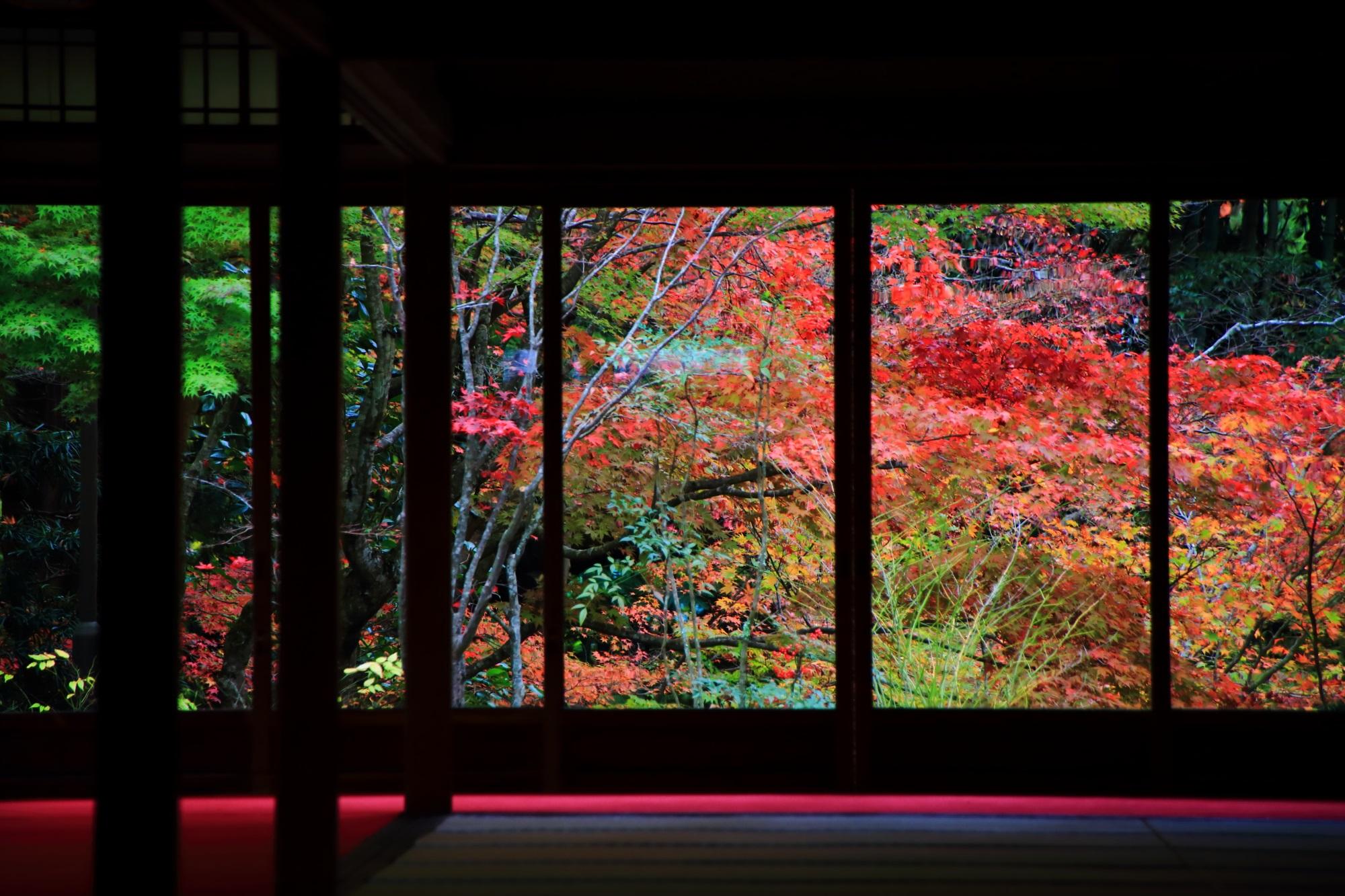 書院のガラス戸の向こうで華やぐ多彩な秋