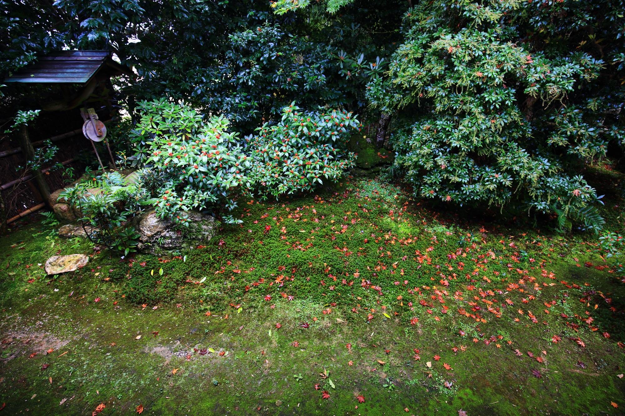 嵯峨直指庵の本堂庭園の苔と風情ある散りもみじ