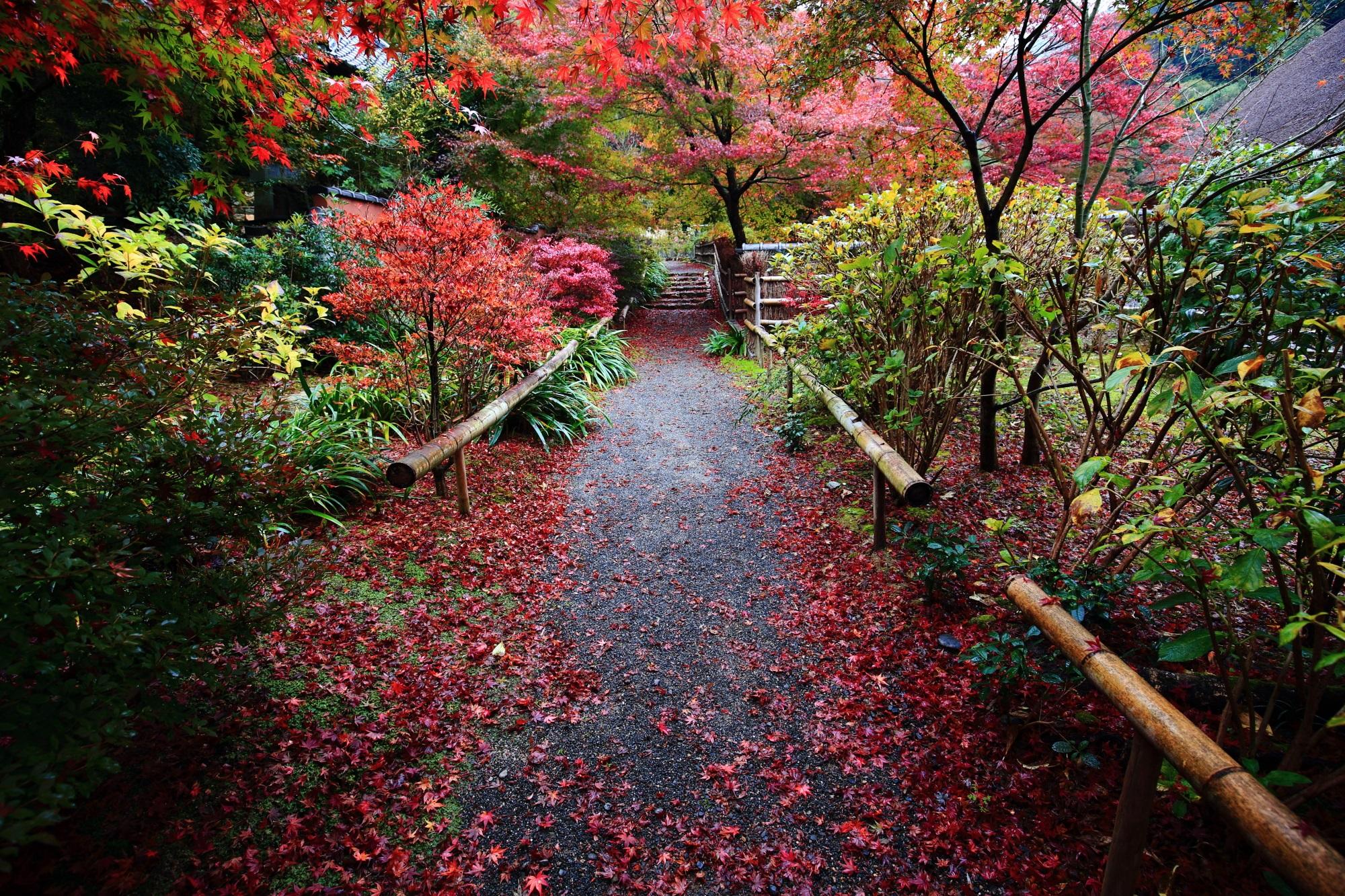 直指庵の阿弥陀堂前の参道の美しい紅葉と散りもみじ