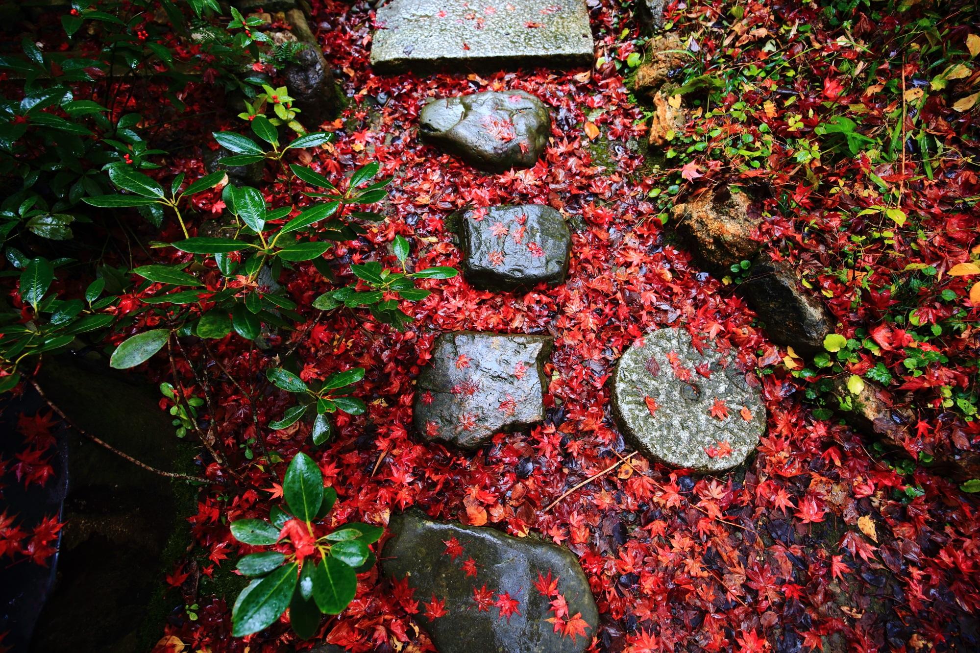 雨に濡れた美しい紅葉につつまれた直指庵の二河白道の庭