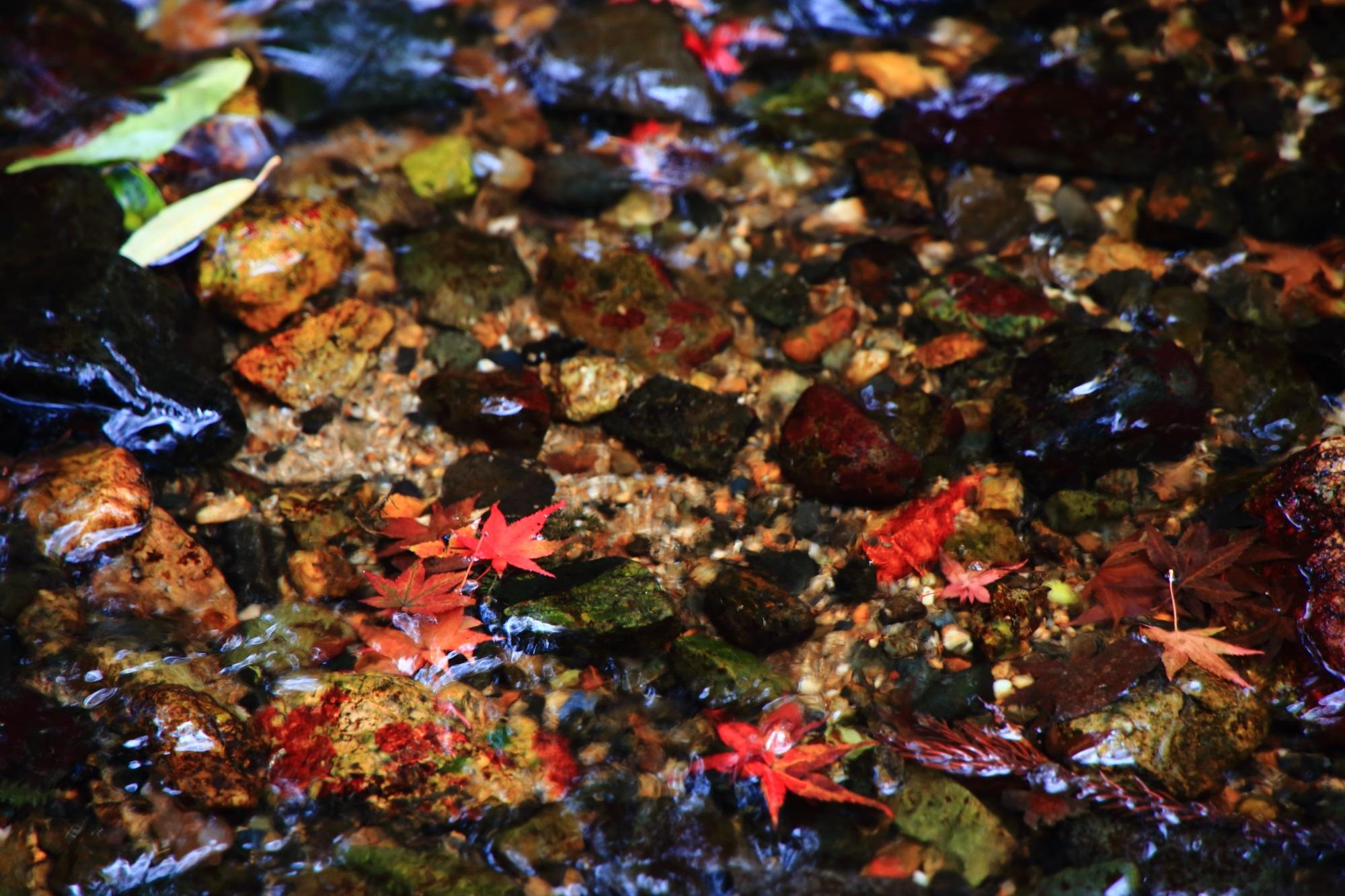 無鄰菴の美しい水を上品に彩る赤い散りもみじ