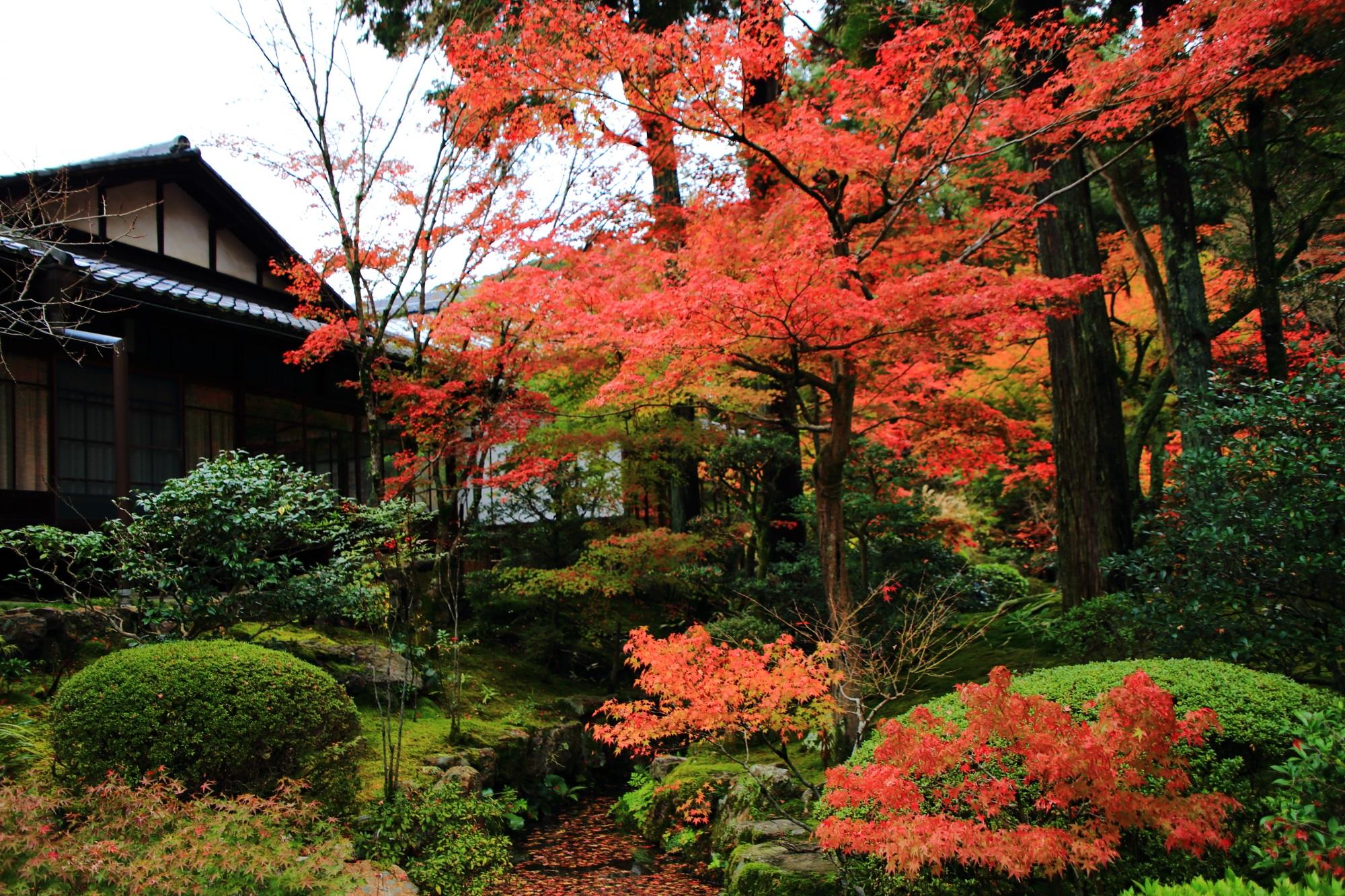 天授庵の緑に映える色合いの紅葉