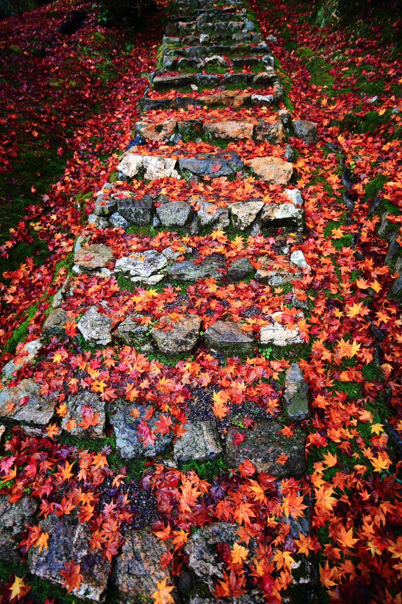 直指庵(じきしあん)の開山堂前石段の色とりどりの散りもみじ