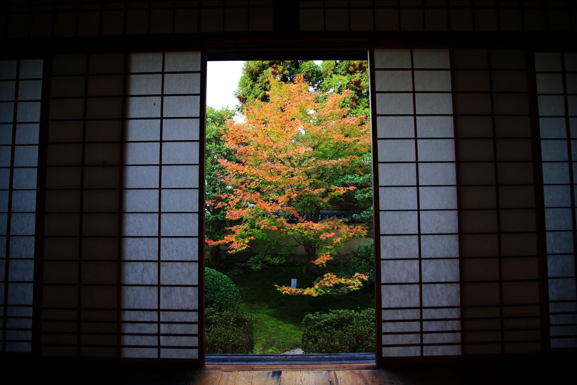 泉涌寺別院の雲龍院の書院悟之間から眺めた紅葉 11月20日