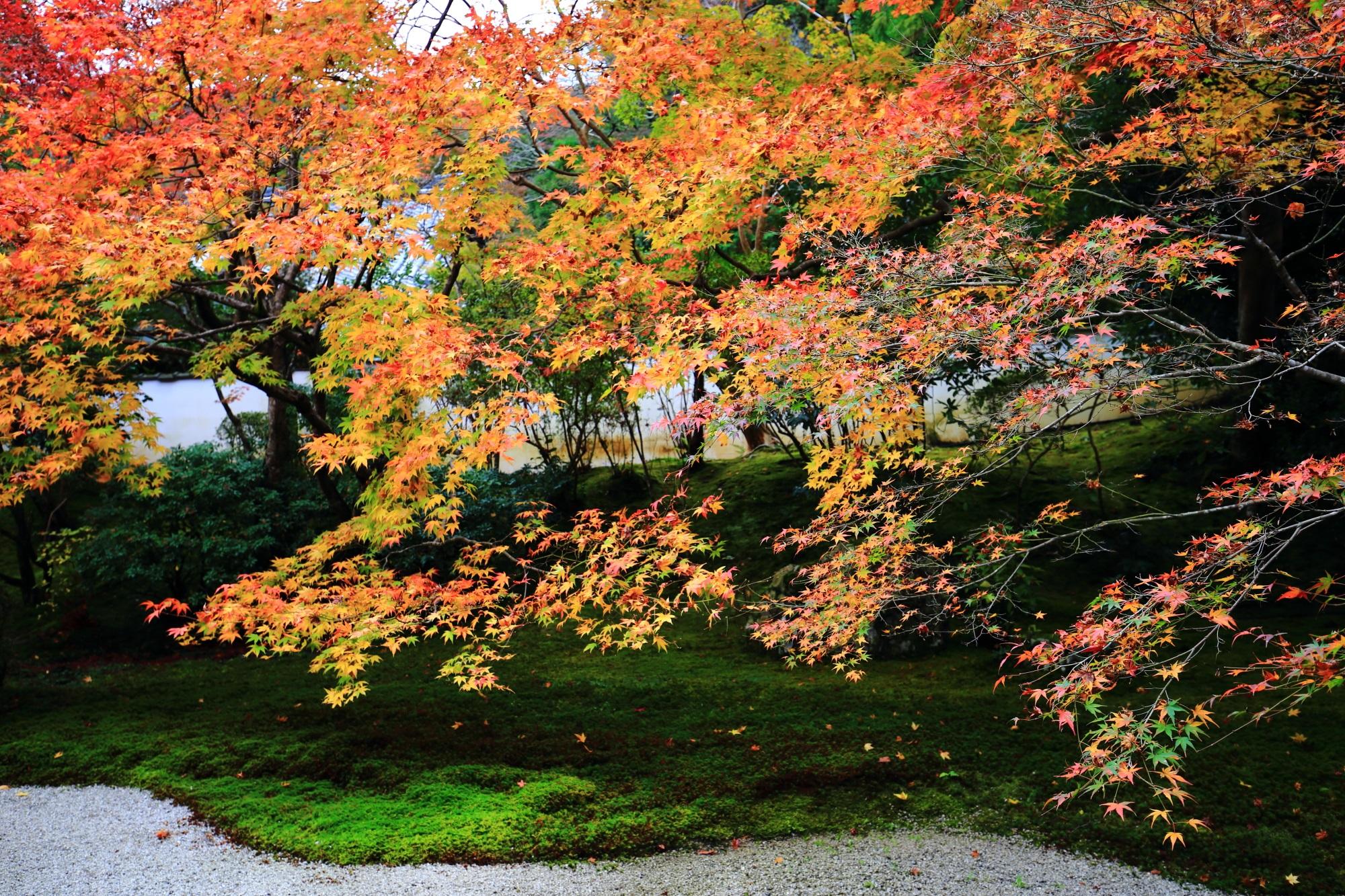 天授庵の緑の苔の上で華やぐ風情ある紅葉