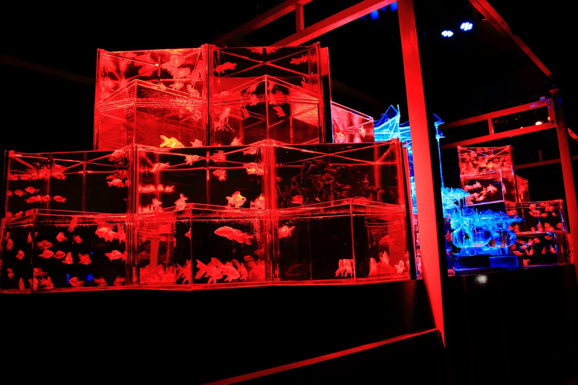 魅惑の金魚の舞 アートアクアリウム城 大奥 二条城