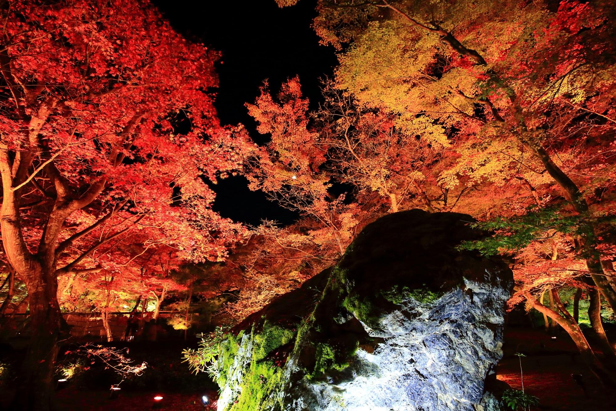 宝厳院 紅葉 ライトアップ 獅子吼の庭と幻想的な紅葉