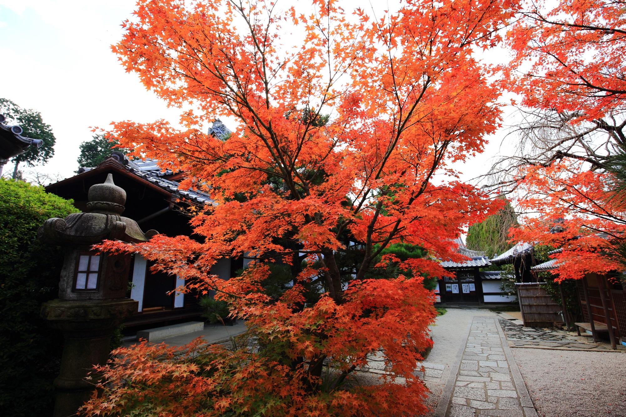 光明院 雲嶺庭 紅葉 見ごろ 秋 東福寺