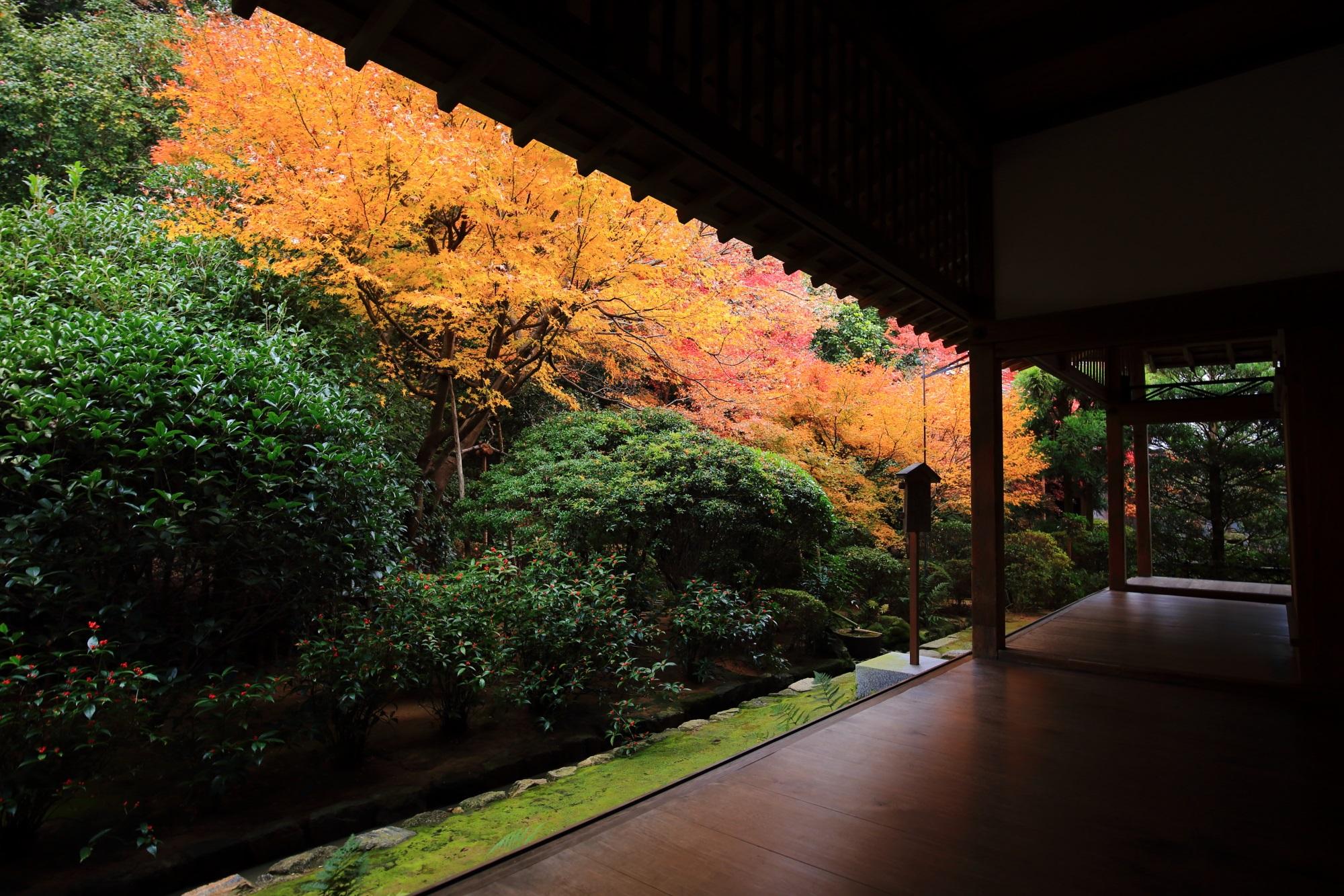 龍安寺の方丈の紅葉